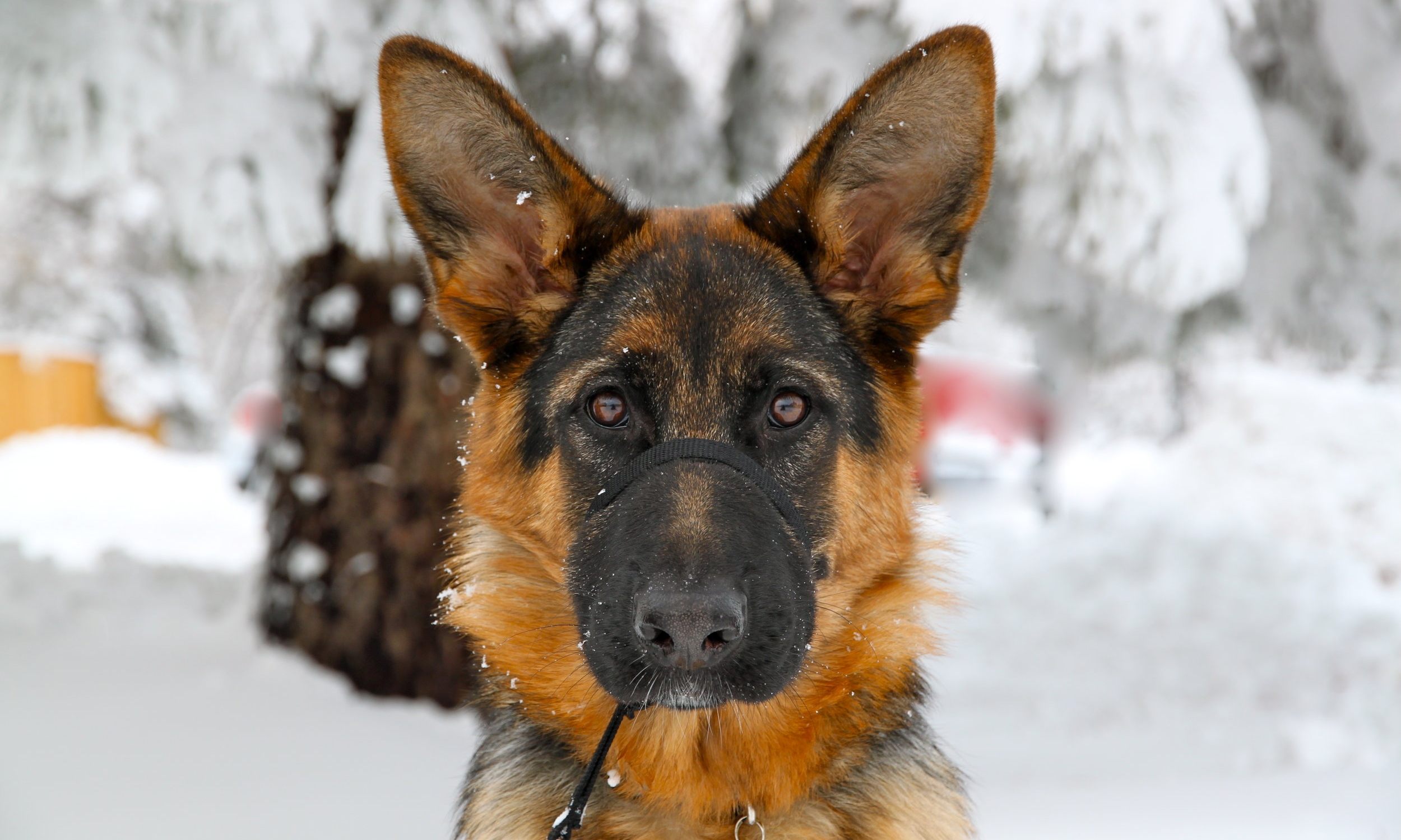 ... Tellie, training during sun or snow