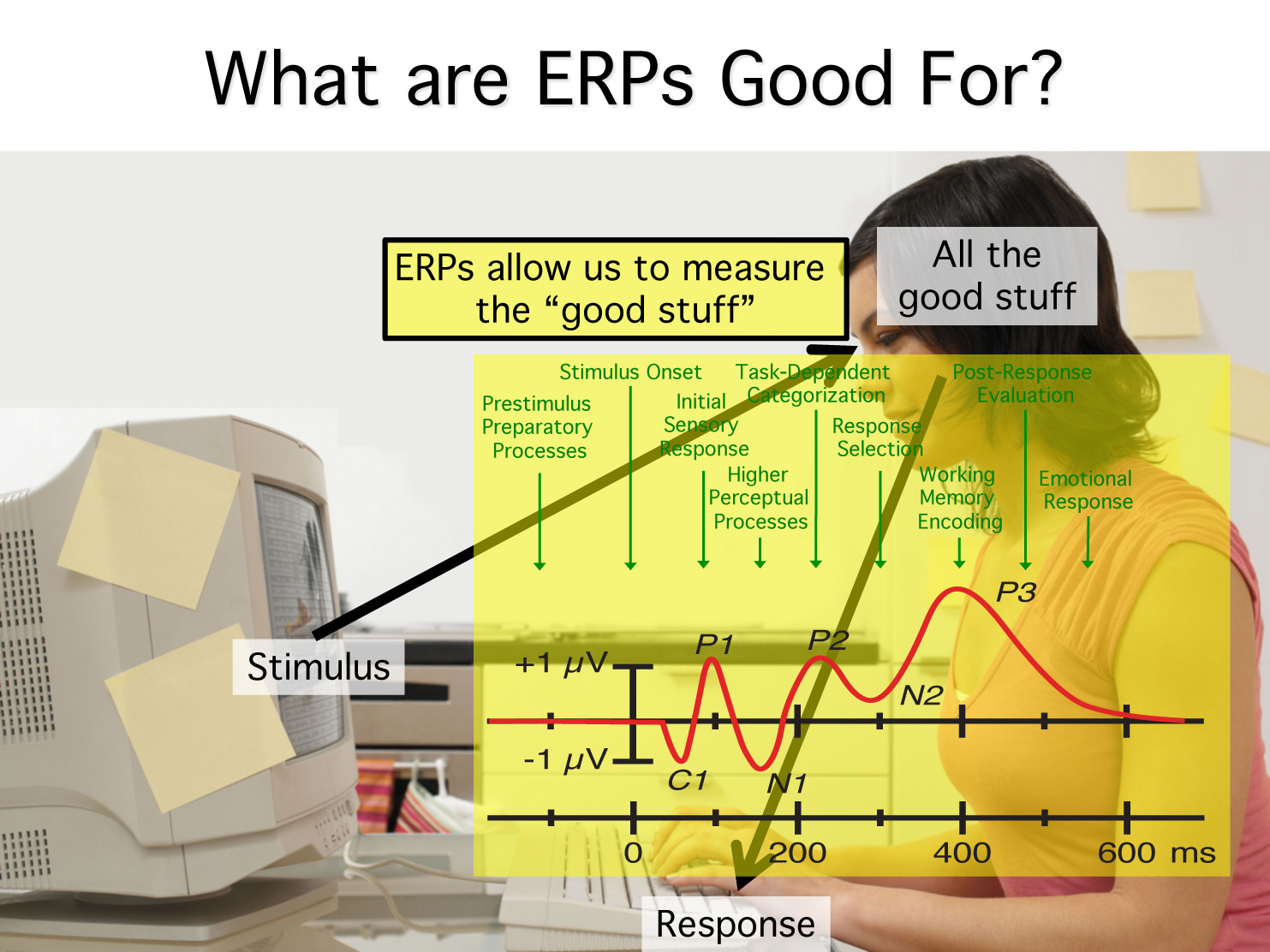 what are erps for.jpg