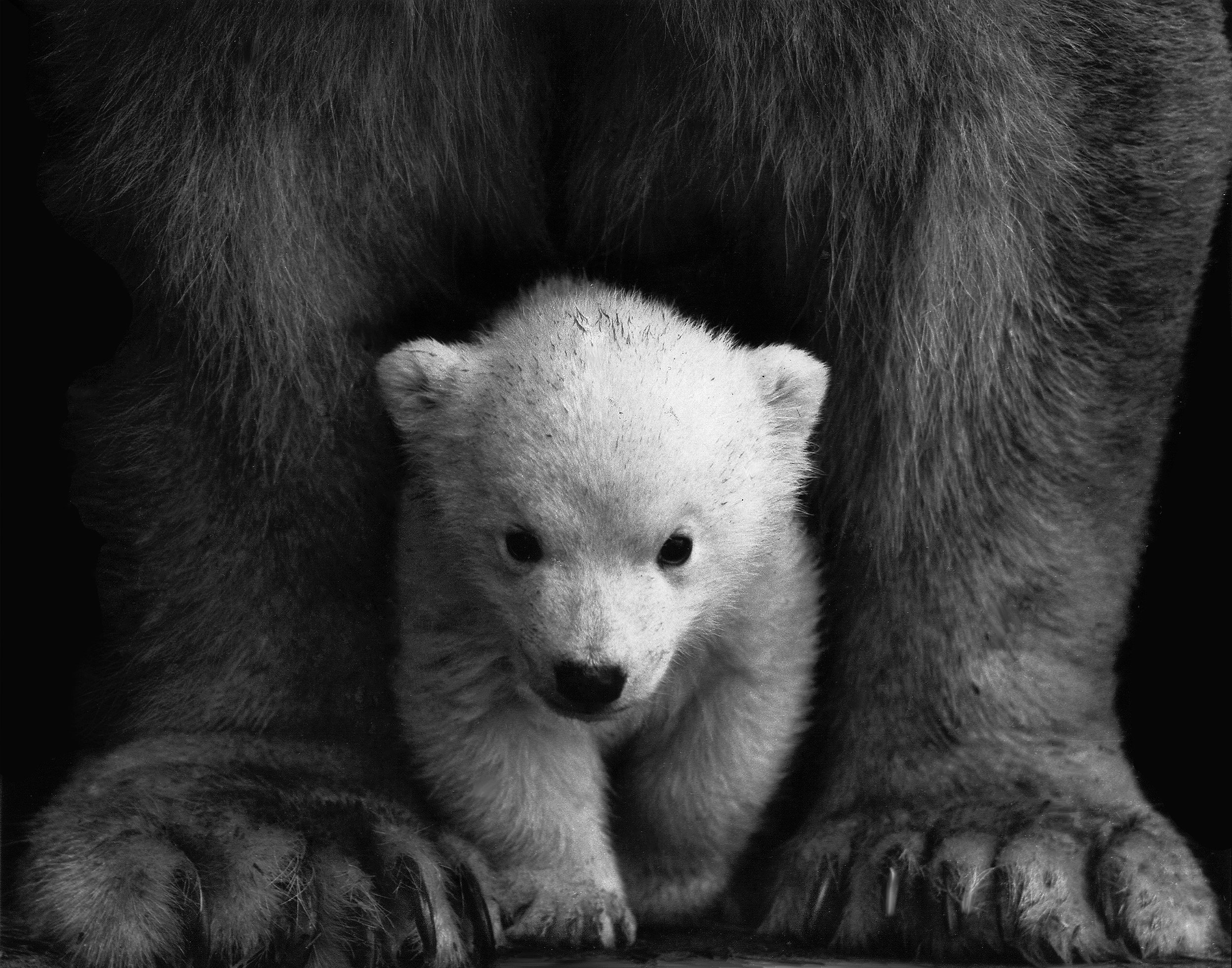 animal-animal-photography-bear-598966.jpg