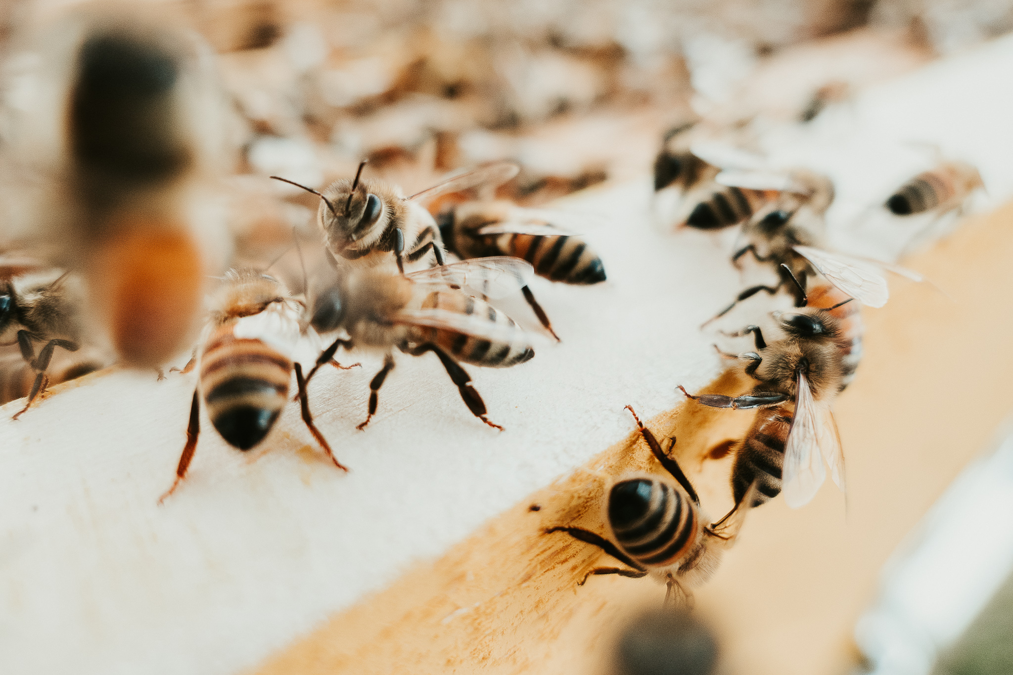 The Importance of Bees for Our Environment & 5 Ways You Can Help Them Sustainable Living Eco-friendly Gardening Green Lifestyle