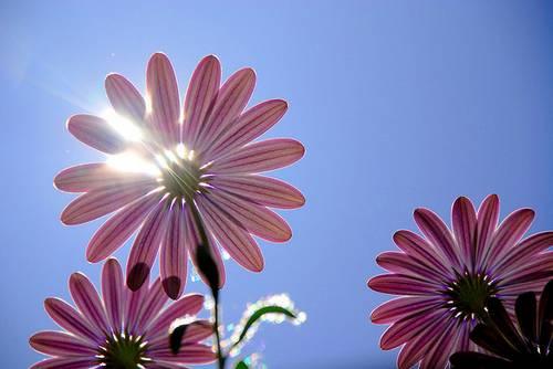 spring131.jpg