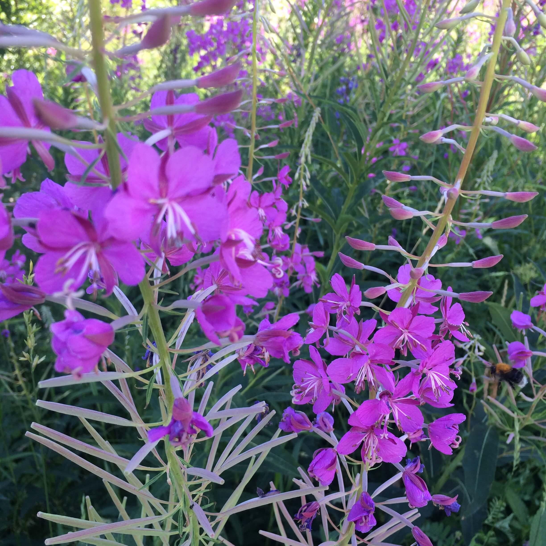 Blomster fra søndagsturen.JPG