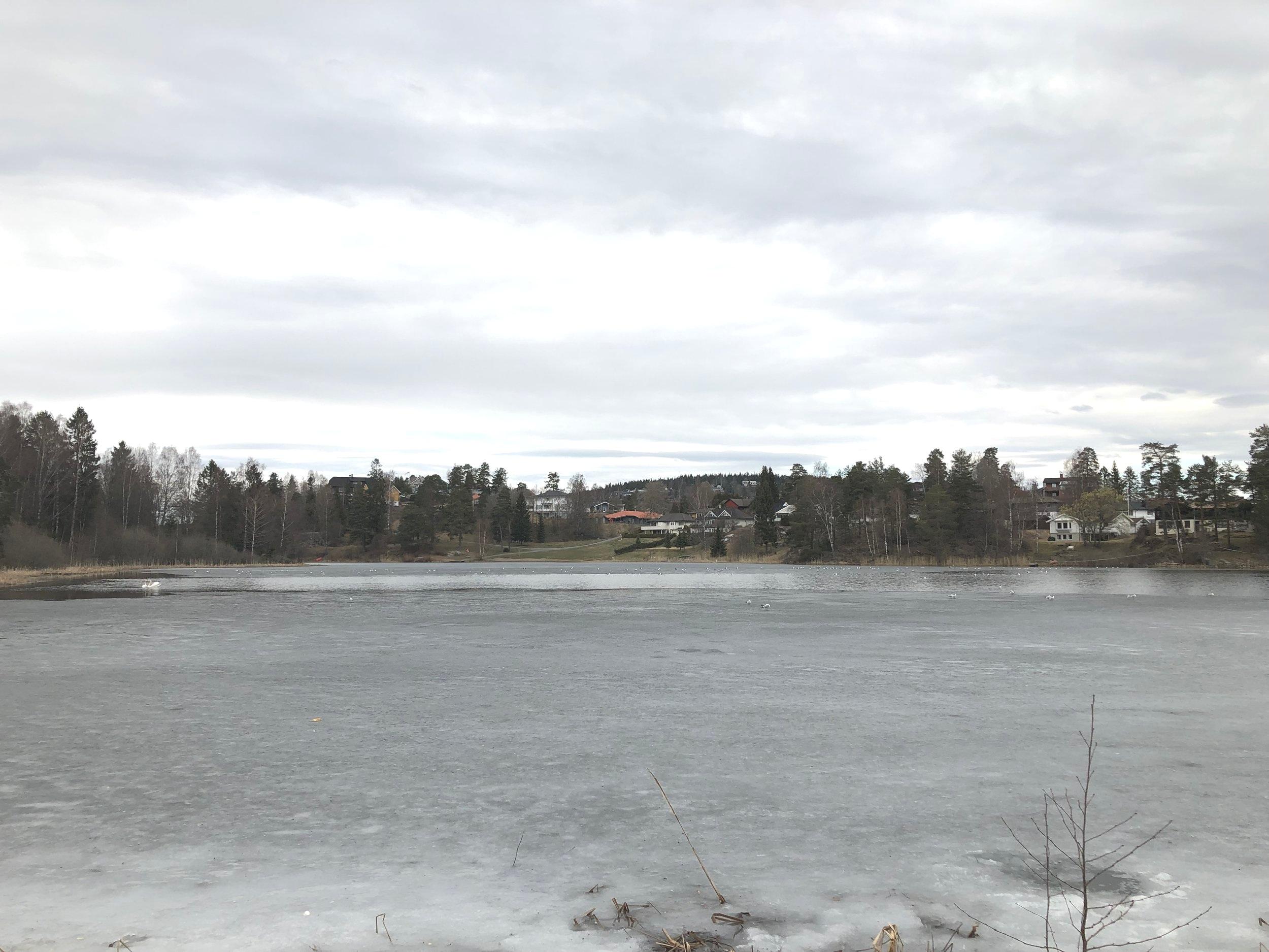 Fremdeles litt is på Langvannet. At de ikke fryser rumpene av seg! Fuglene, altså…