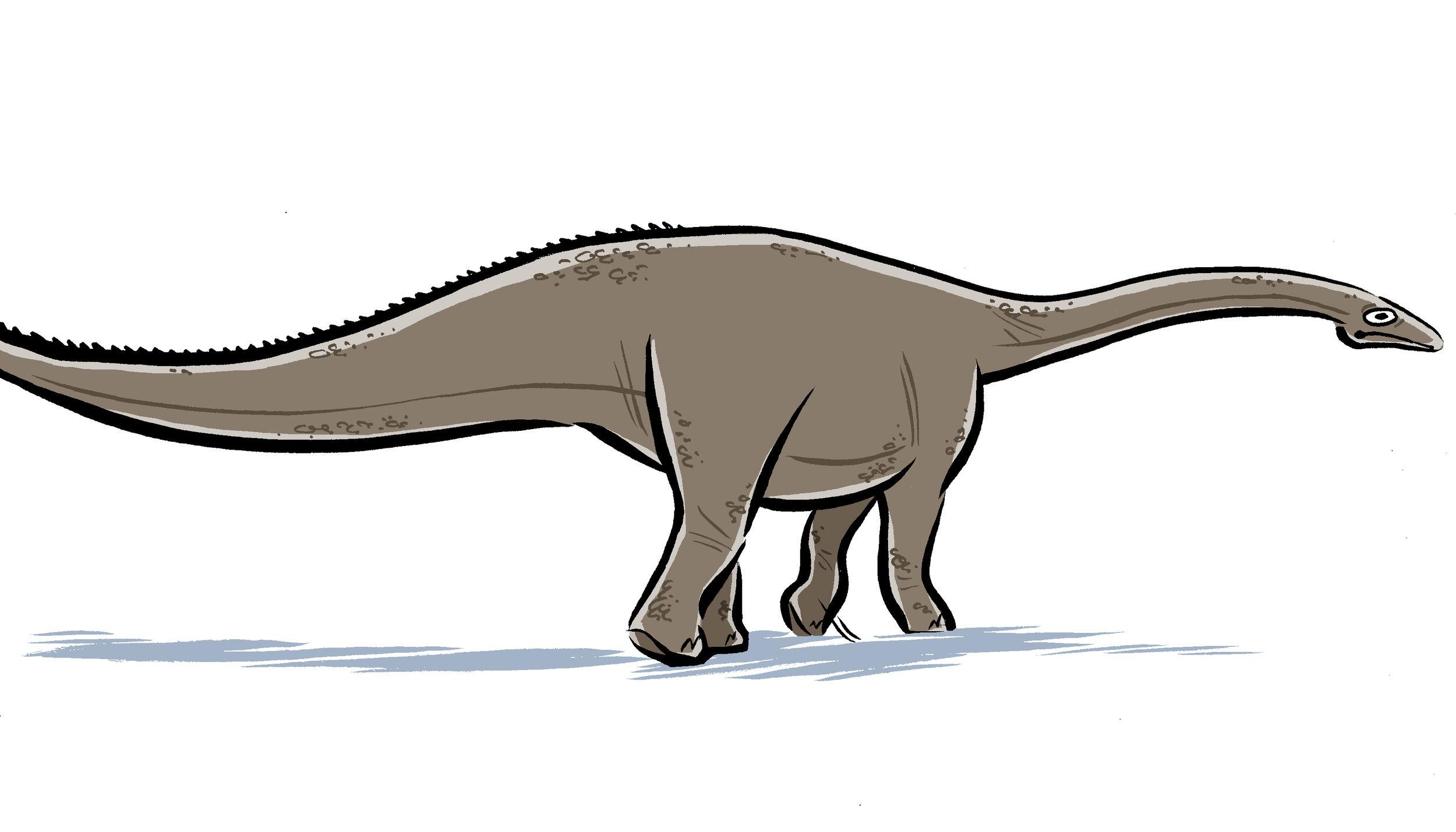 12 Diplodocus.jpg
