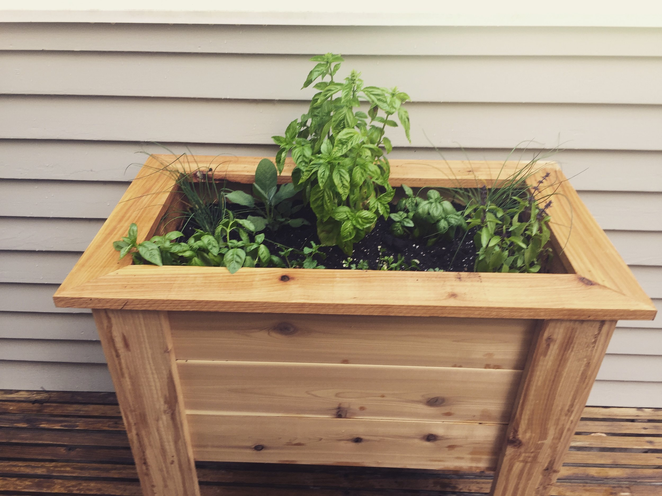 Rustic Cedar Planter - The planter is all Cedar with stainless screws and it comes natural or finished with oil or stain. The frame around the top can be with rough square edges (shown) or with a smooth round-over. Handmade in Madison, Connecticut.