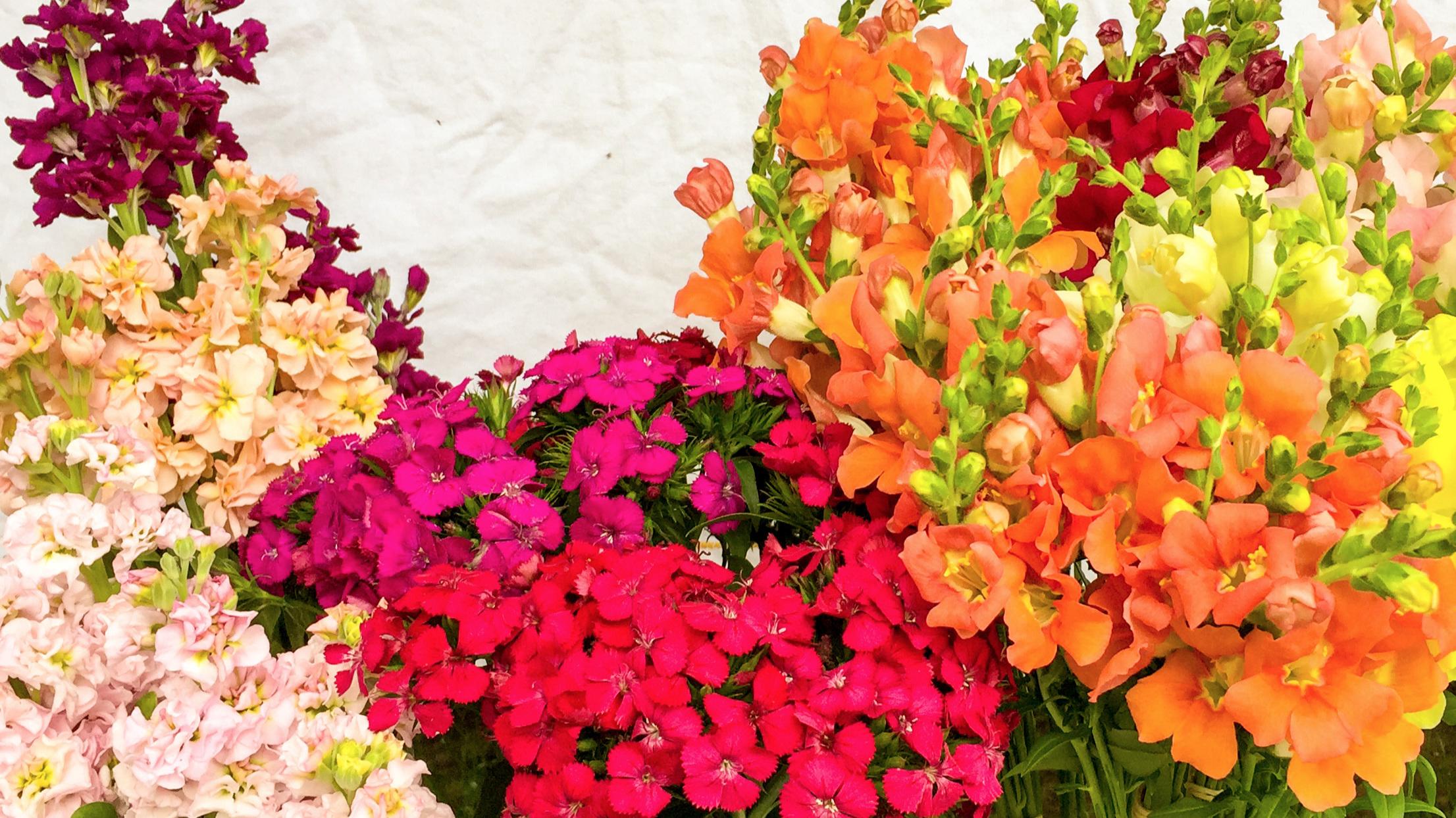 flower+bar+1.jpg