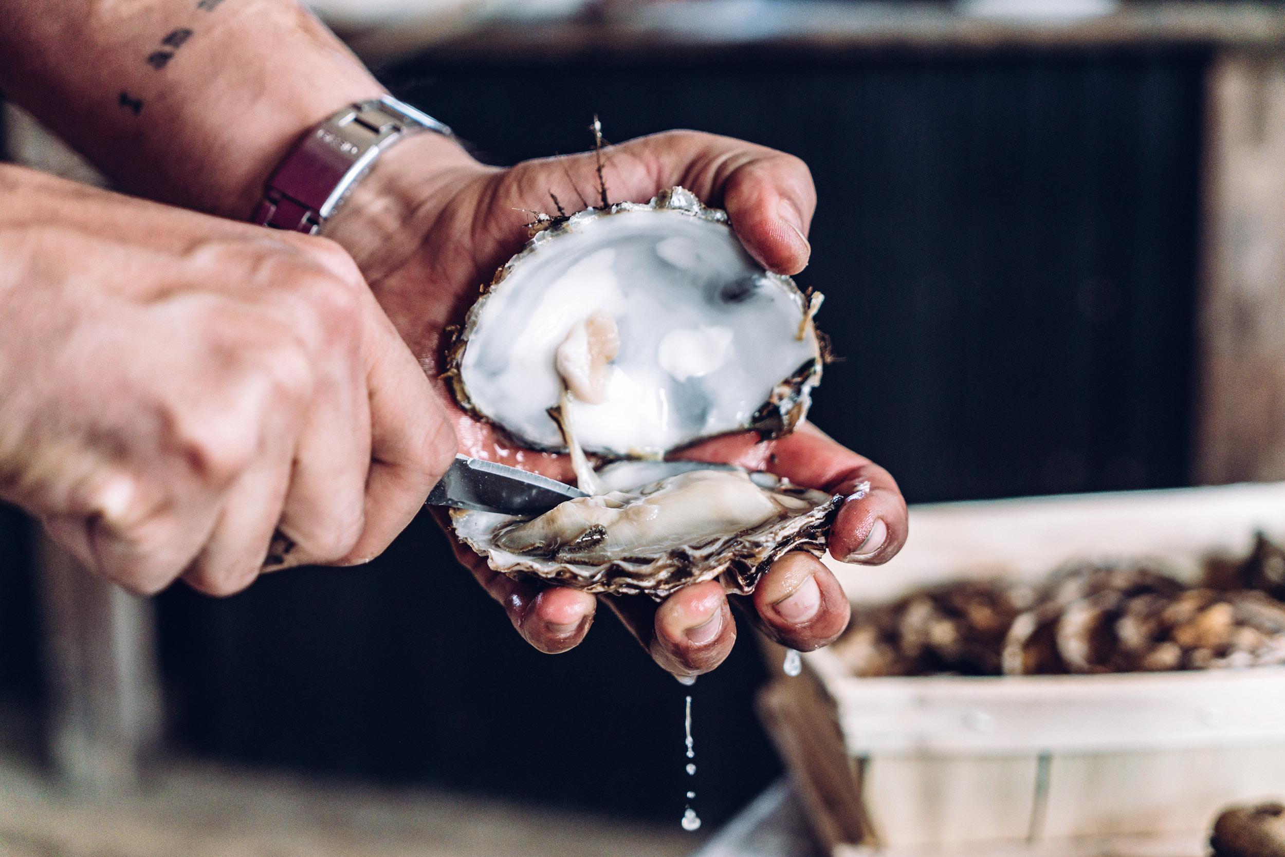 Richard Haward's Oysters 1