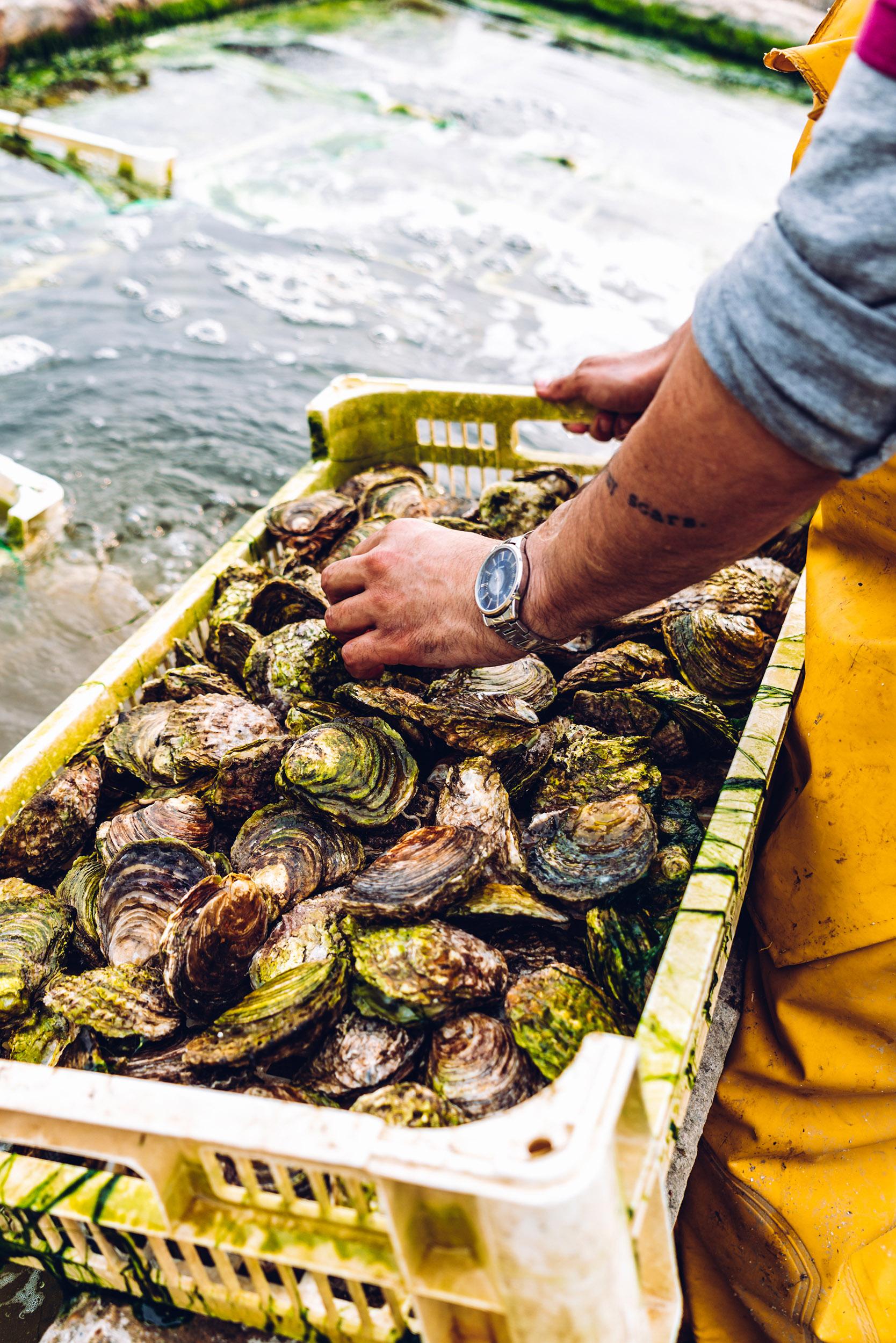 Richard Haward's Oysters | Tom Haward | Mersea 3
