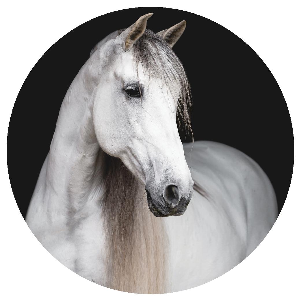 horse circle-05.png