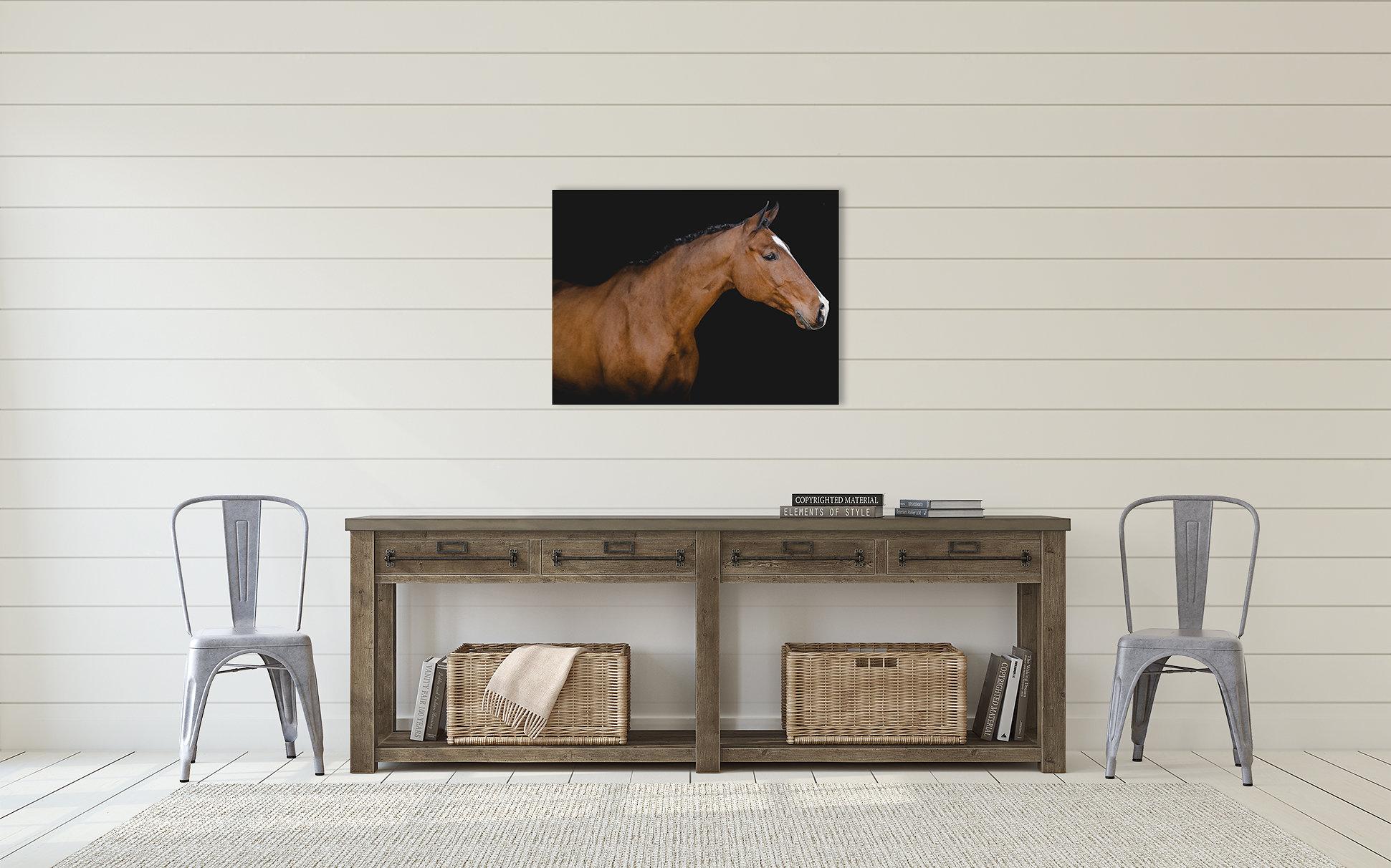Equine White Background Horse Photography Sara Shier