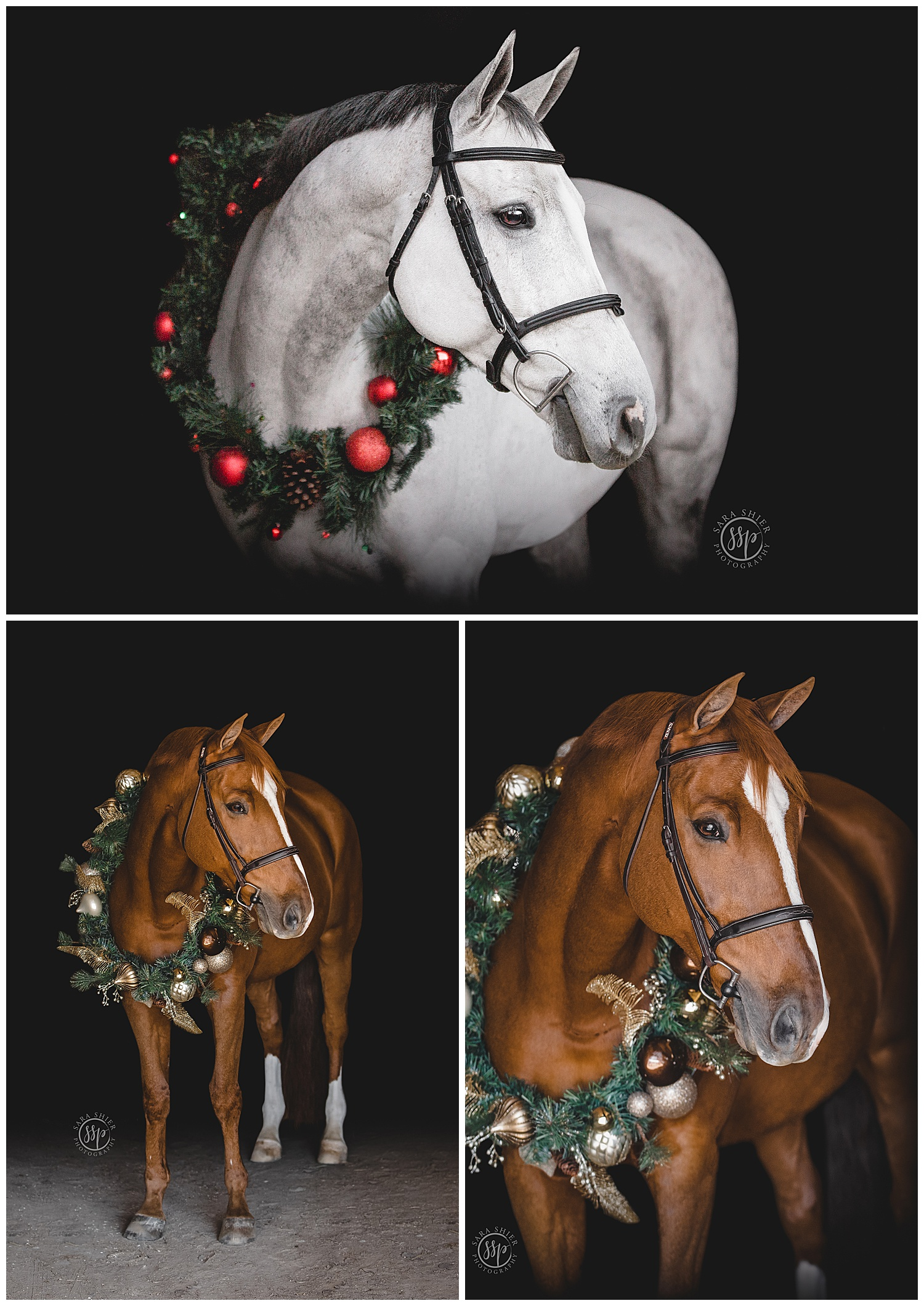 Black Background Horse Rider Equine Photographer Southern California Sara Shier Photography SoCal Equestrian Cowgirl_0156.jpg