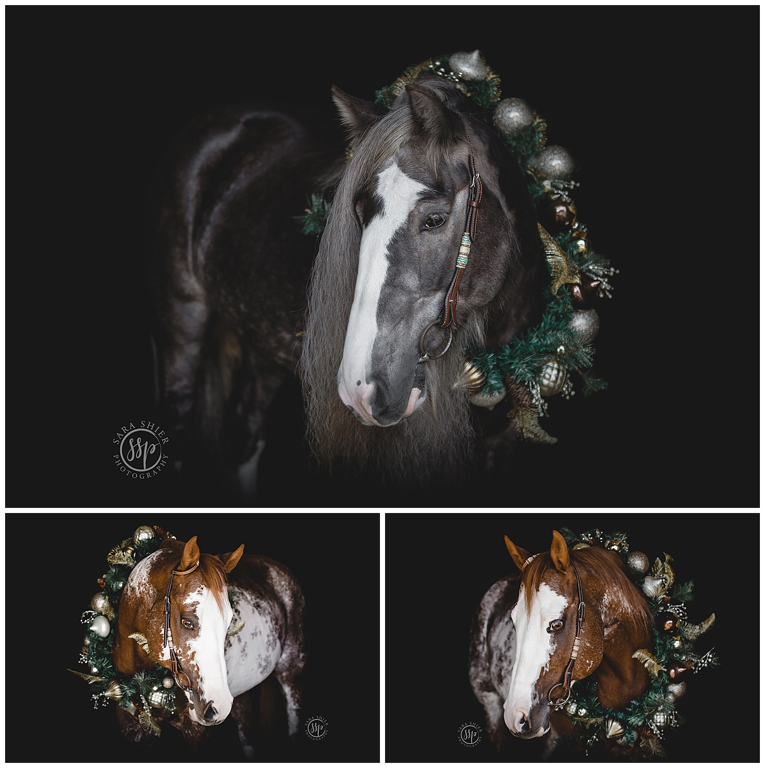 Black Background Horse Rider Equine Photographer Southern California Sara Shier Photography SoCal Equestrian Cowgirl_0157.jpg