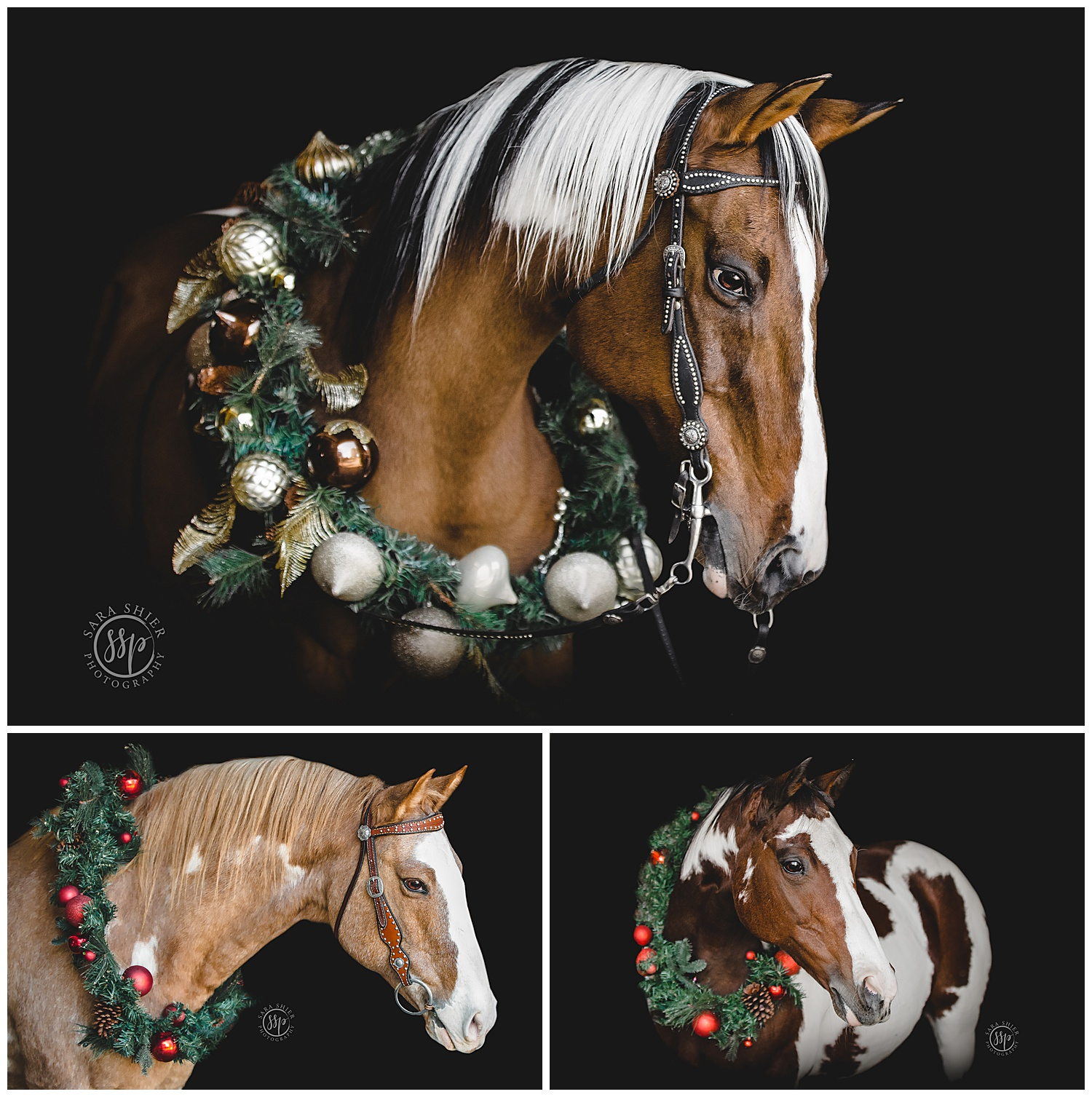 Black Background Horse Rider Equine Photographer Southern California Sara Shier Photography SoCal Equestrian Cowgirl_0159.jpg