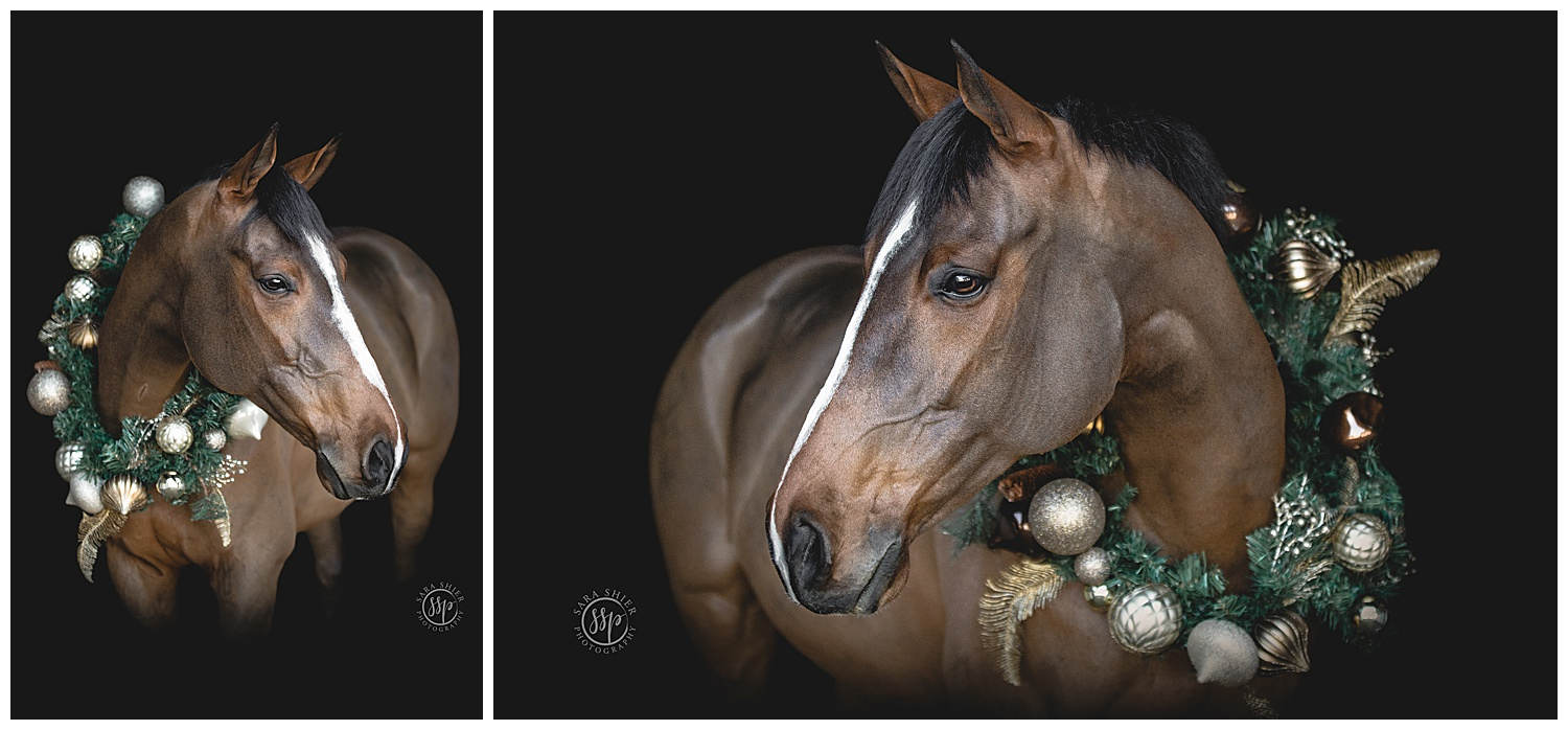 Black Background Horse Rider Equine Photographer Southern California Sara Shier Photography SoCal Equestrian Cowgirl_0163.jpg