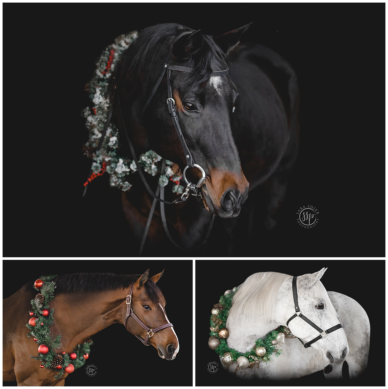 Black Background Horse Rider Equine Photographer Southern California Sara Shier Photography SoCal Equestrian Cowgirl_0169.jpg
