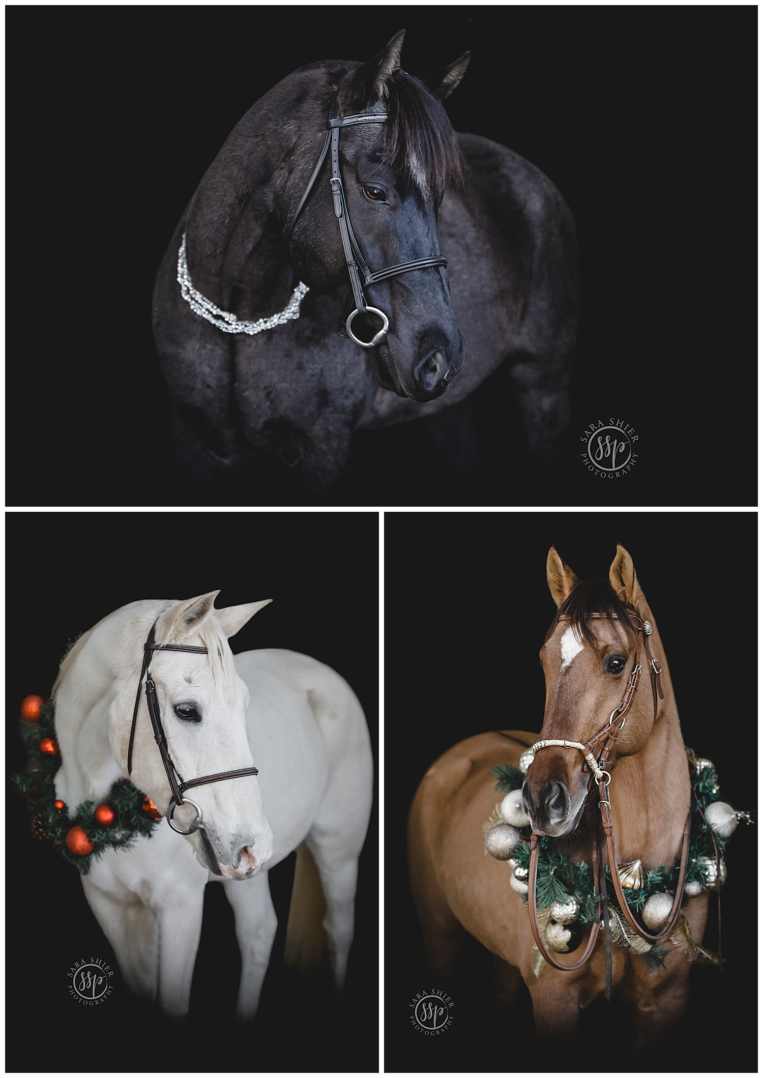 Black Background Horse Rider Equine Photographer Southern California Sara Shier Photography SoCal Equestrian Cowgirl_0168.jpg