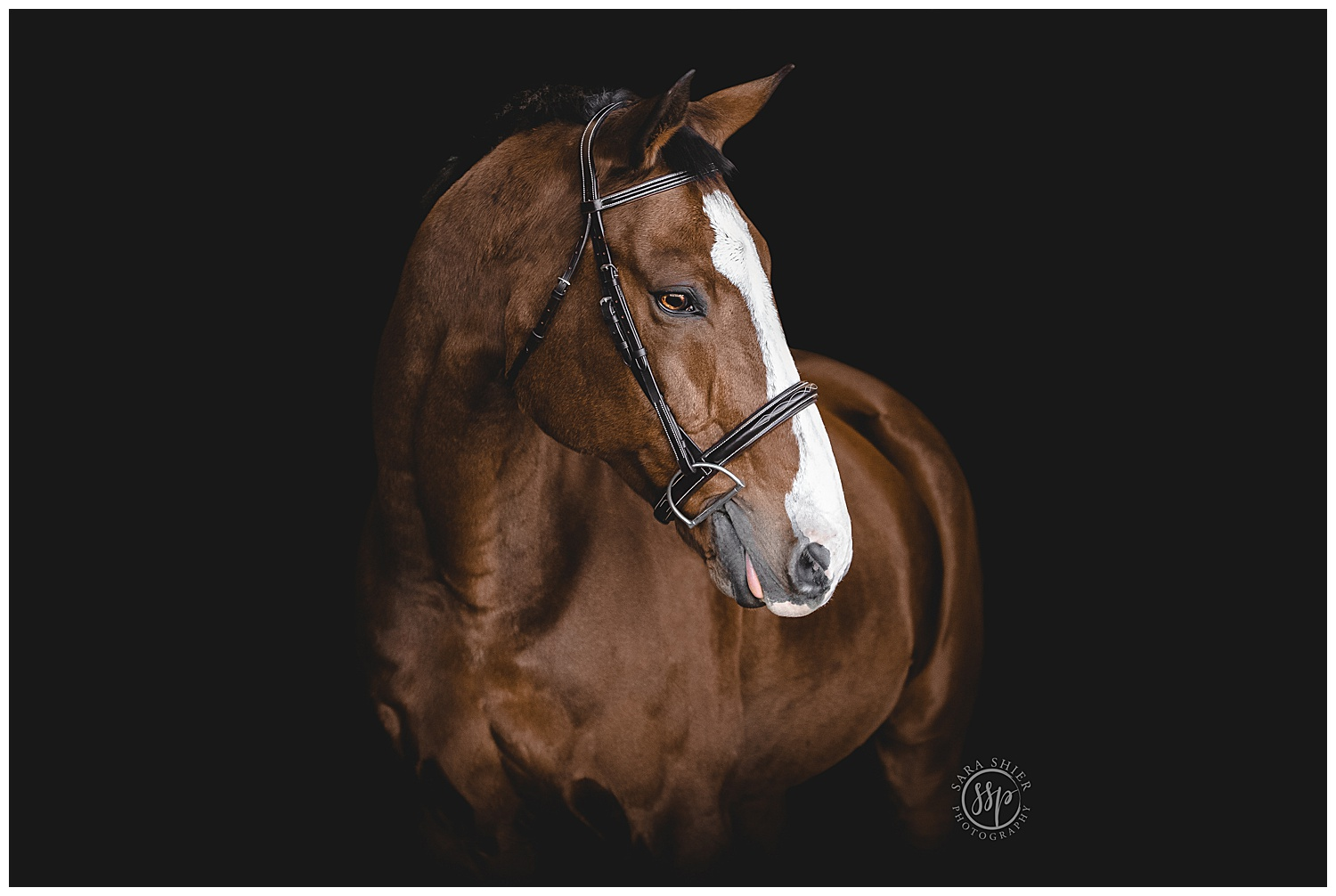 Black Background Horse Rider Equine Photographer Southern California Sara Shier Photography SoCal Equestrian Cowgirl_0214.jpg