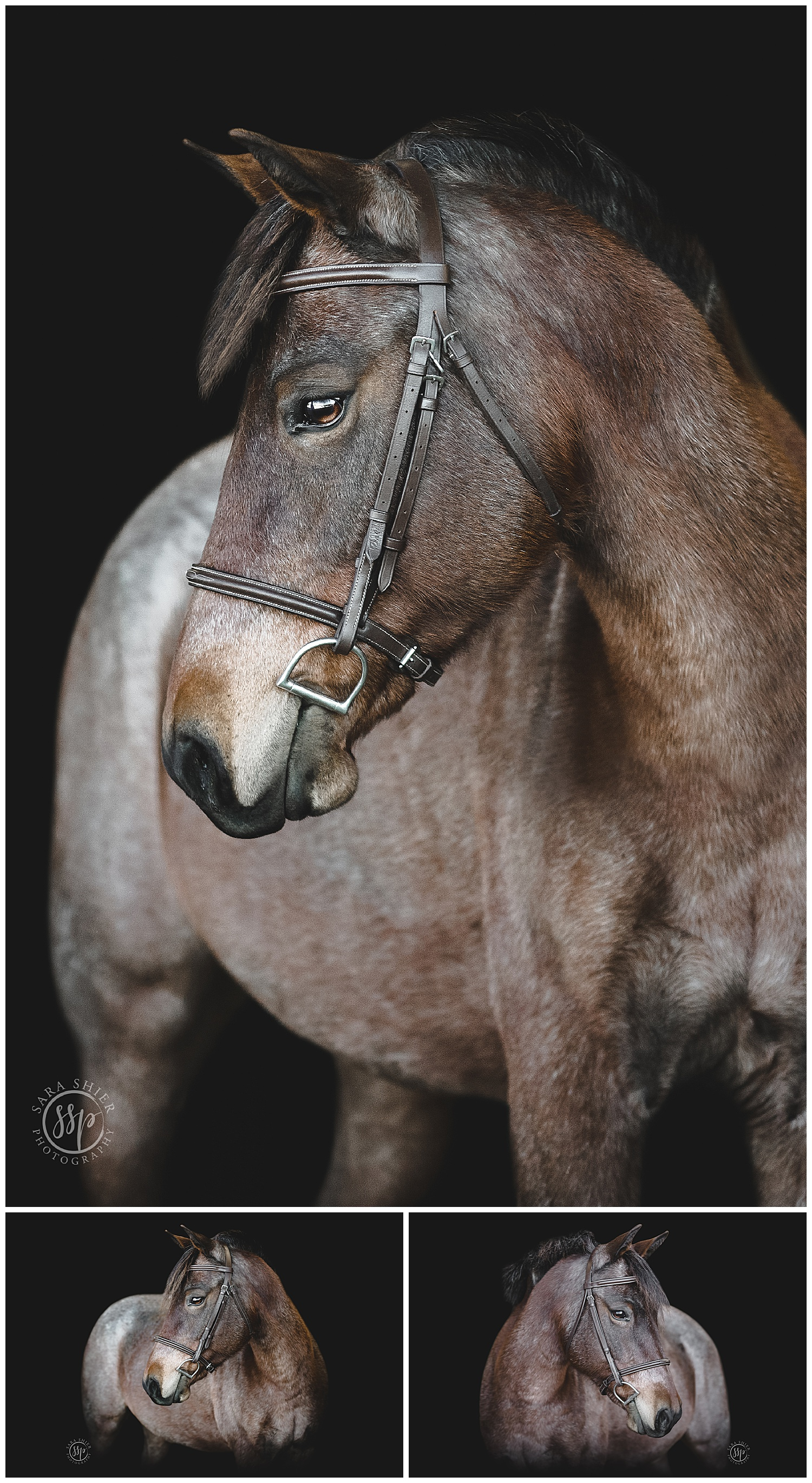 Black Background Horse Rider Equine Photographer Southern California Sara Shier Photography SoCal Equestrian Cowgirl_0231.jpg