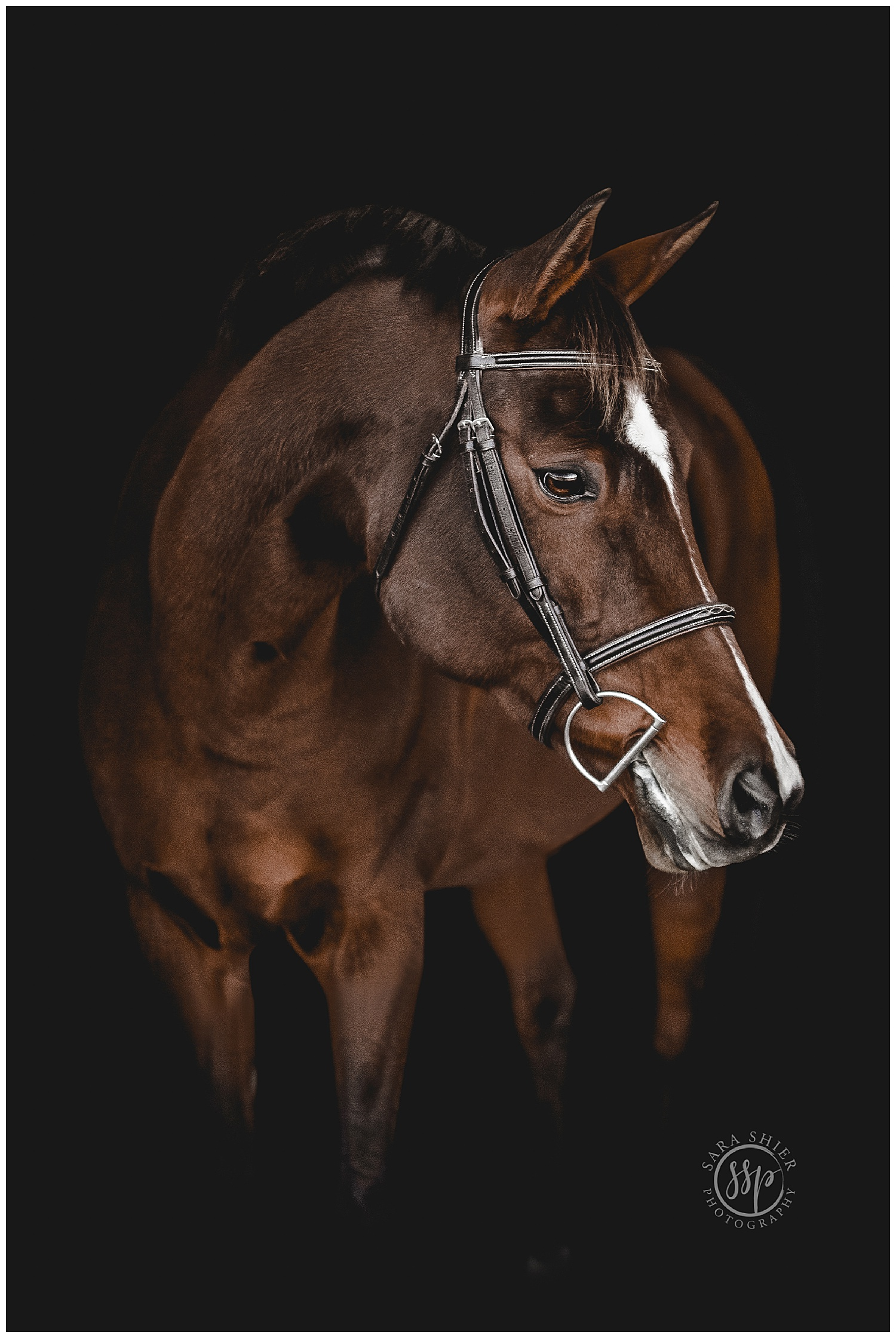 Black Background Horse Rider Equine Photographer Southern California Sara Shier Photography SoCal Equestrian Cowgirl_0233.jpg