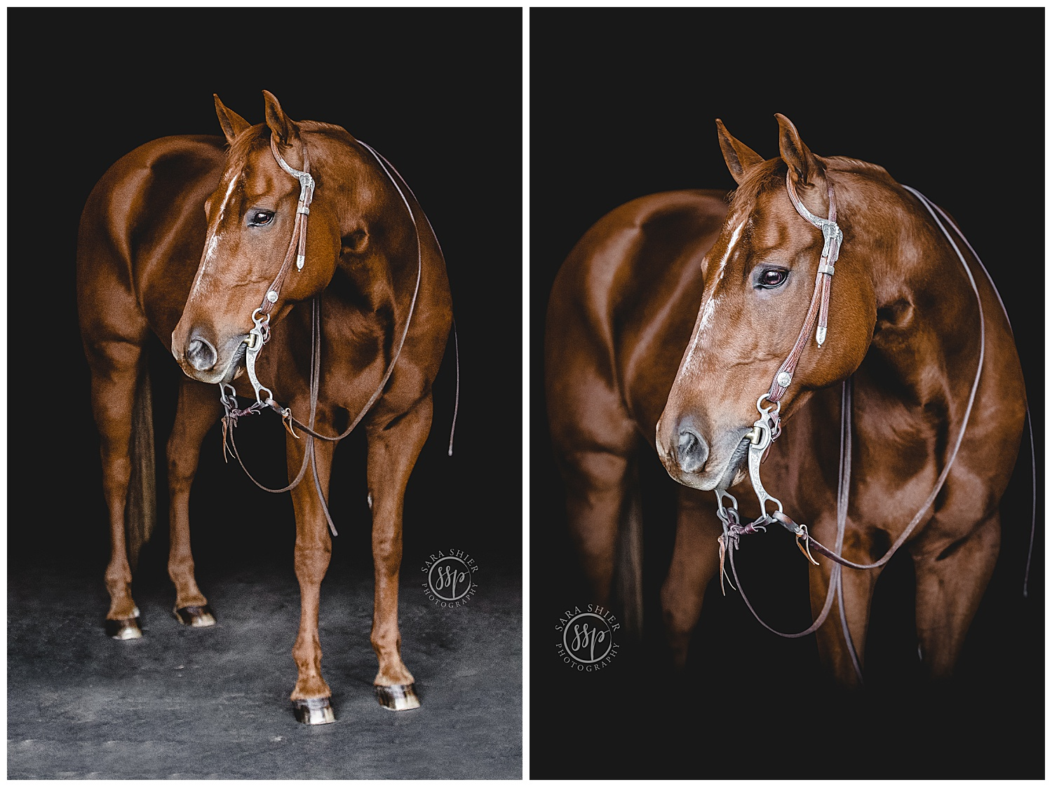 Black Background Horse Rider Equine Photographer Southern California Sara Shier Photography SoCal Equestrian Cowgirl_0335.jpg