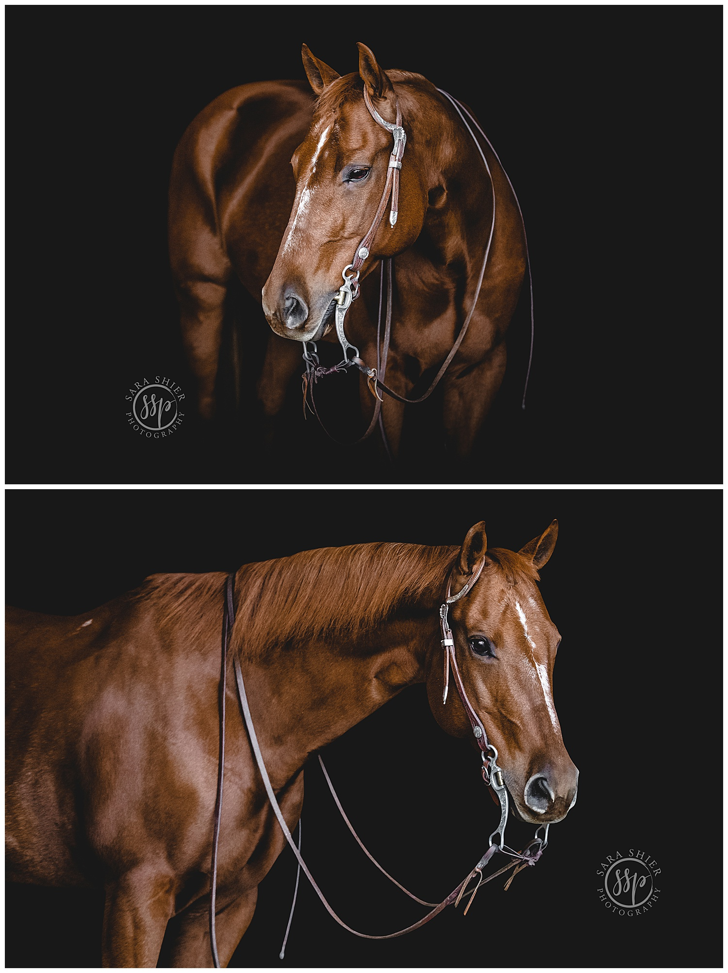 Black Background Horse Rider Equine Photographer Southern California Sara Shier Photography SoCal Equestrian Cowgirl_0336.jpg