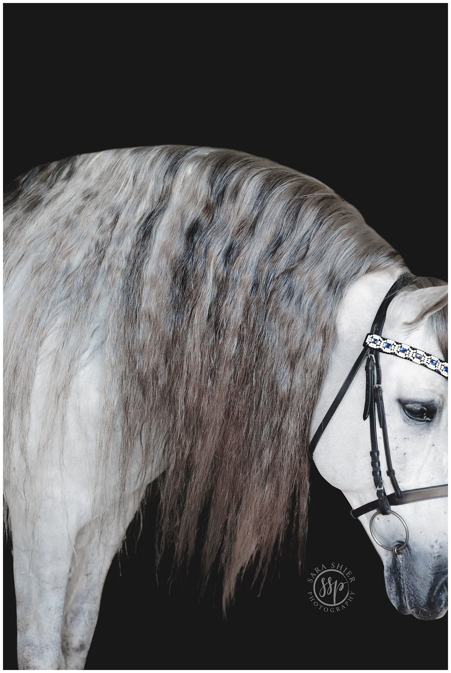 Black Background Horse Rider Equine Photographer Southern California Sara Shier Photography SoCal Equestrian Cowgirl_0481.jpg