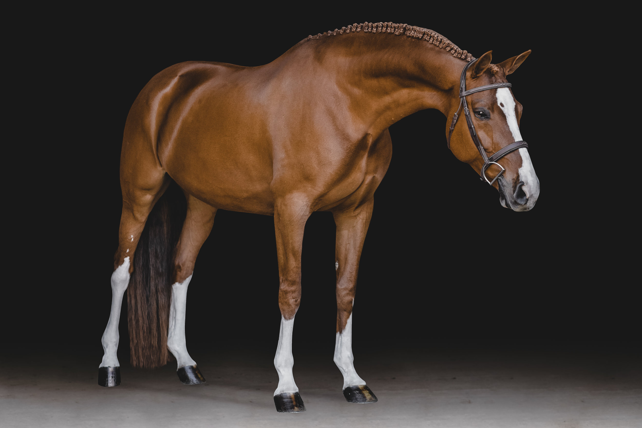 CLEAN CRISP CLASSIC - Bring your horse into a studio without the hassle and expensive price tag. Black Backgrounds are not only a gorgeous portrayal of your horse's beauty but a sleek and stylish way to add your equine companion to your home decor. These portrait sessions include multiple poses ranging from headshots to full bodies, to capture your horse's best features and personality.