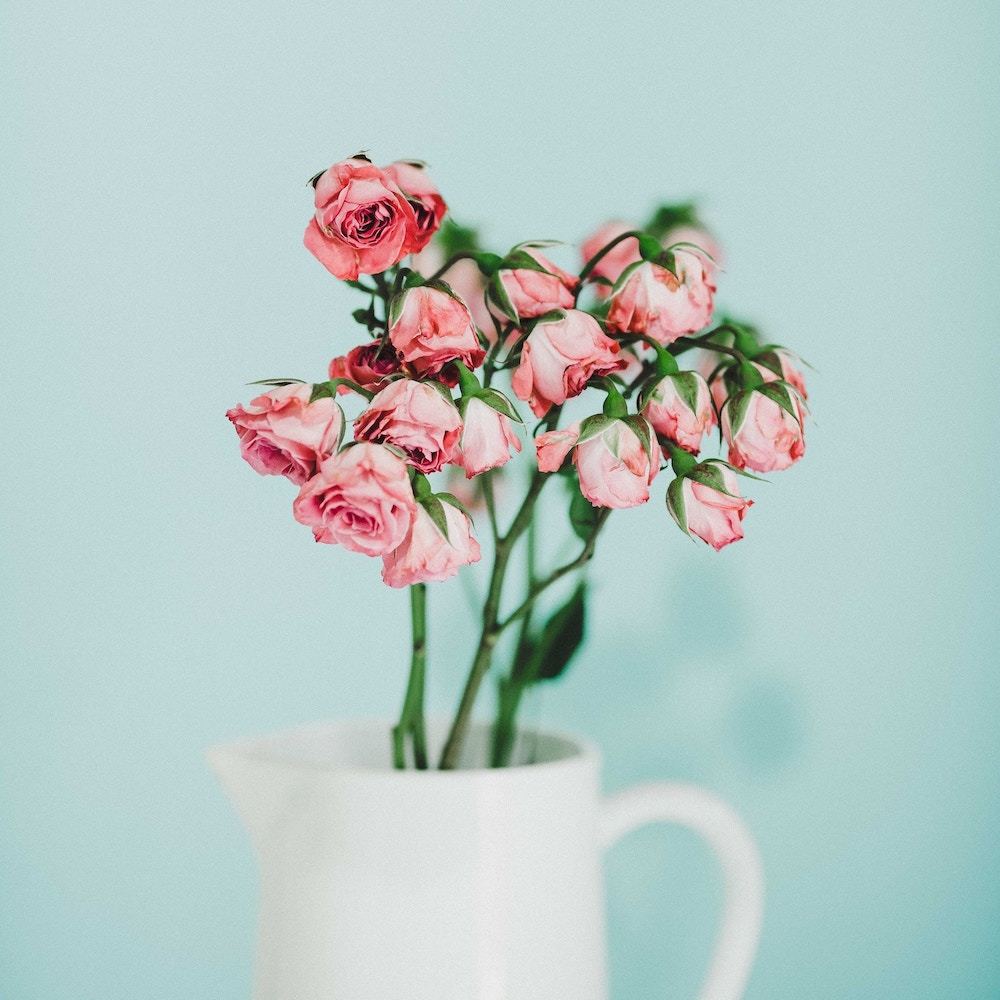 pink-flowers-white-vase-blue-background