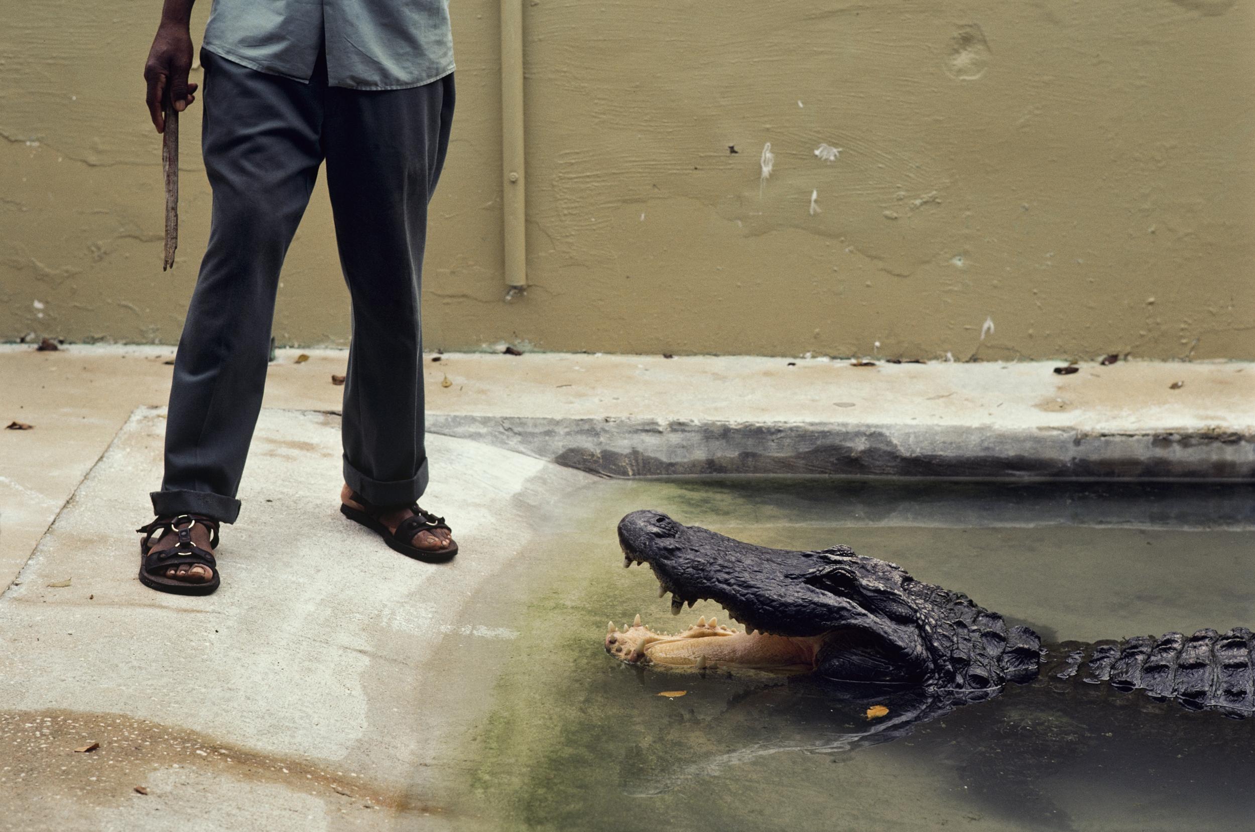 Alligator Farm | Granja de cocodrilos, St. Augustine