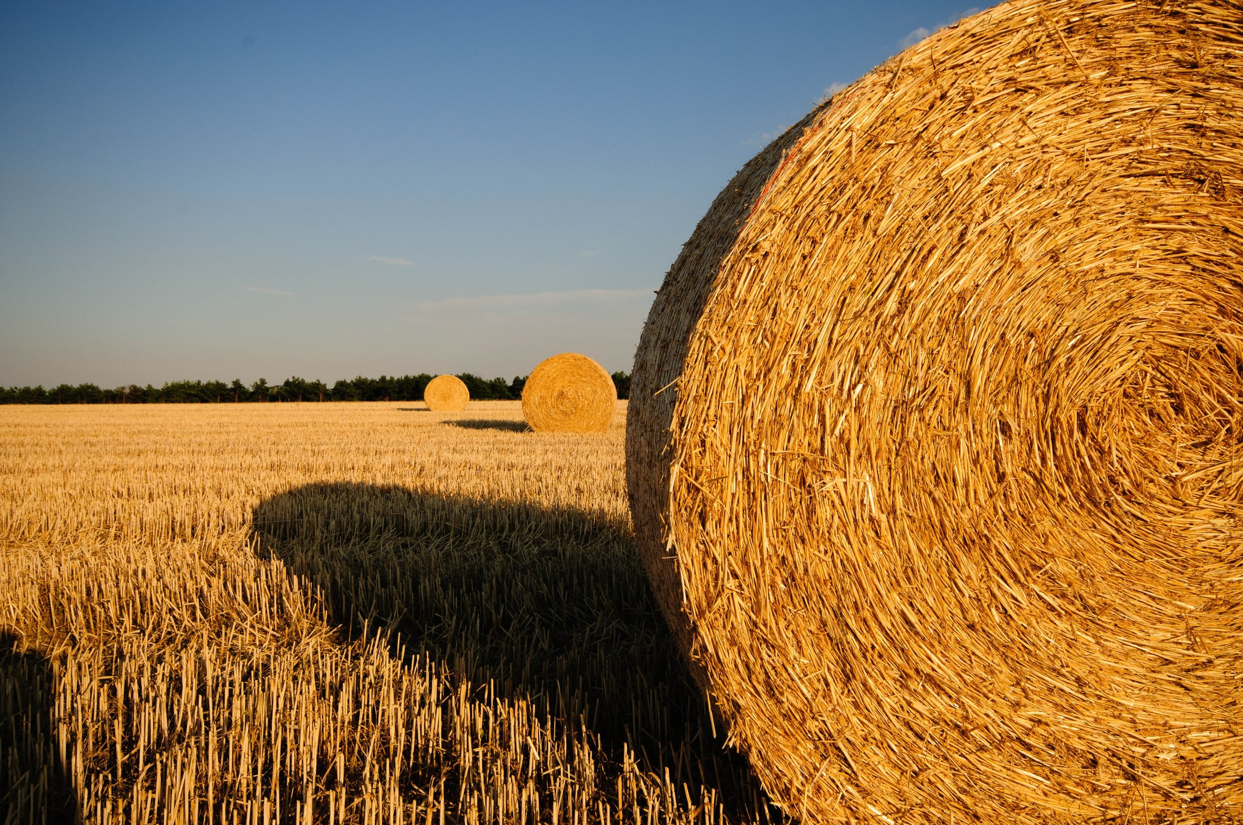 farm-field-harvest-33131.jpg