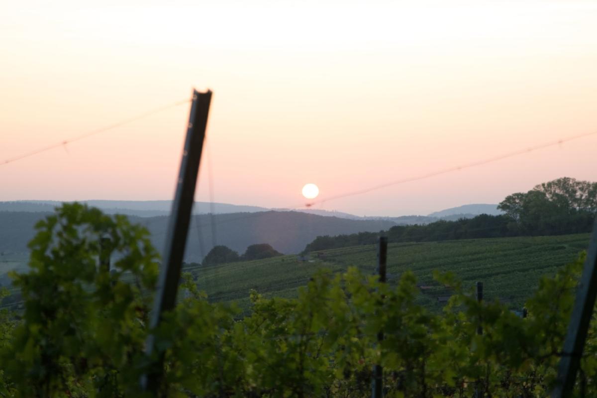 Weinberge in Dietlingen - Aussichtspunkt