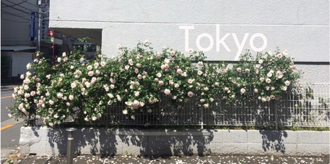 tokyo cover.png