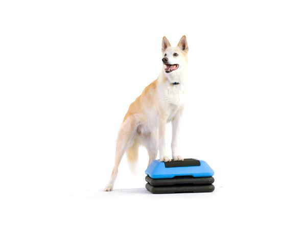 dog models_ellie.jpg