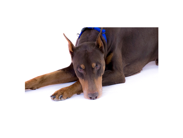 dog models_braker.jpg