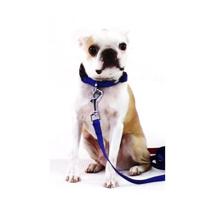 dog models_bardoc.jpg