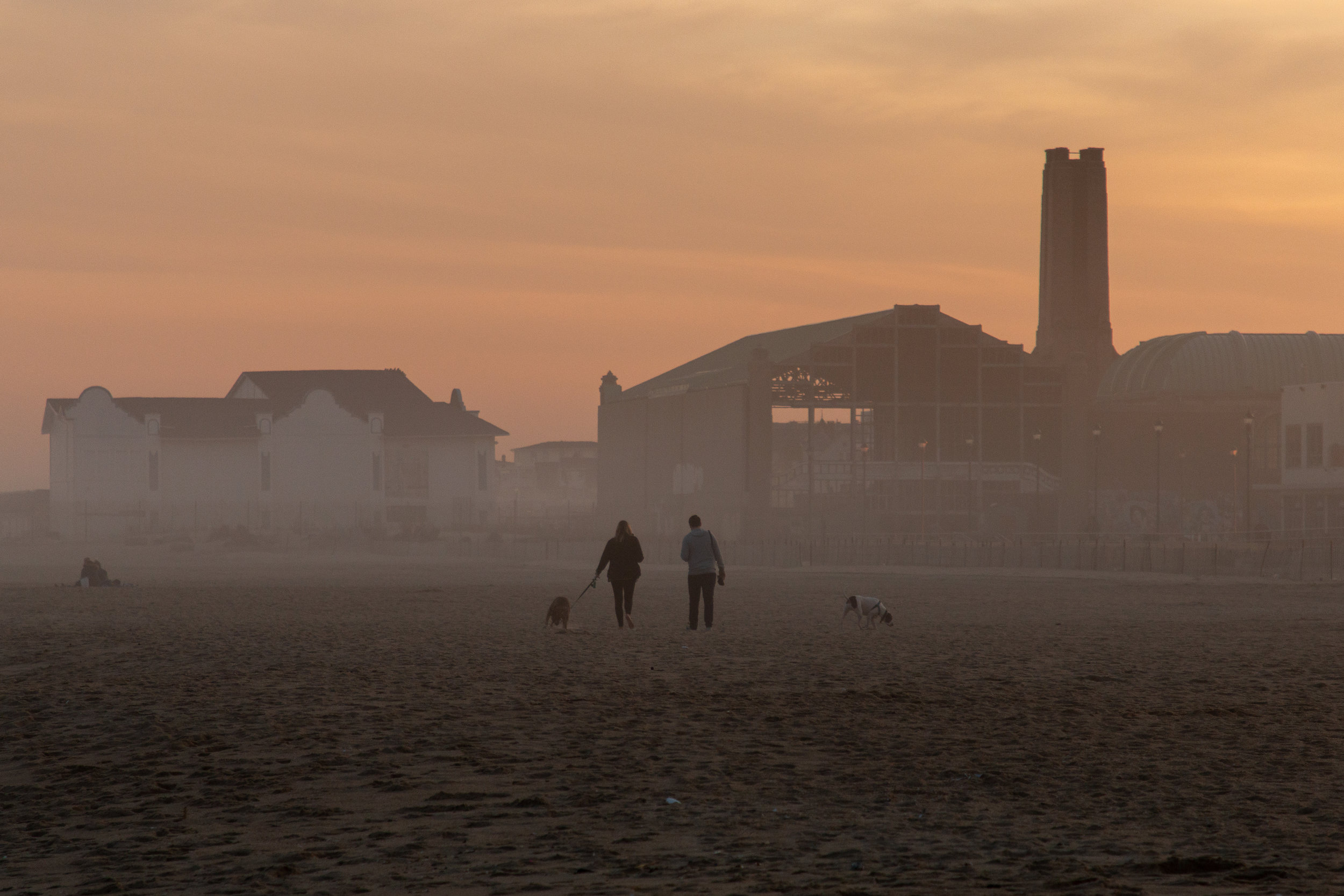 People walking dogs on beach in Asbury Park, New Jersey. Photo by Kayleigh Ann Archbold.