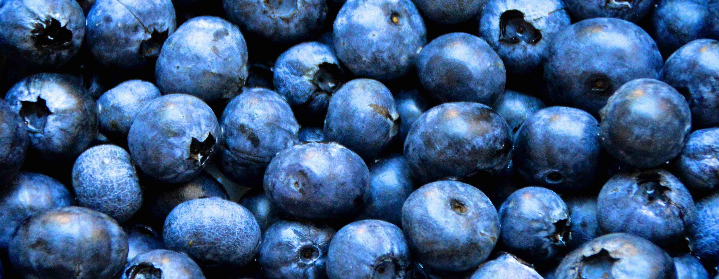blueberries-banner.jpg