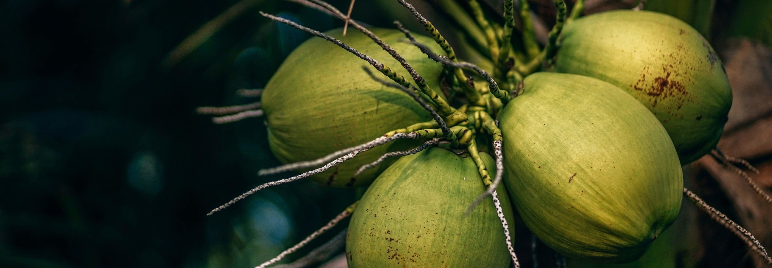 Coconut-oil-health.jpg