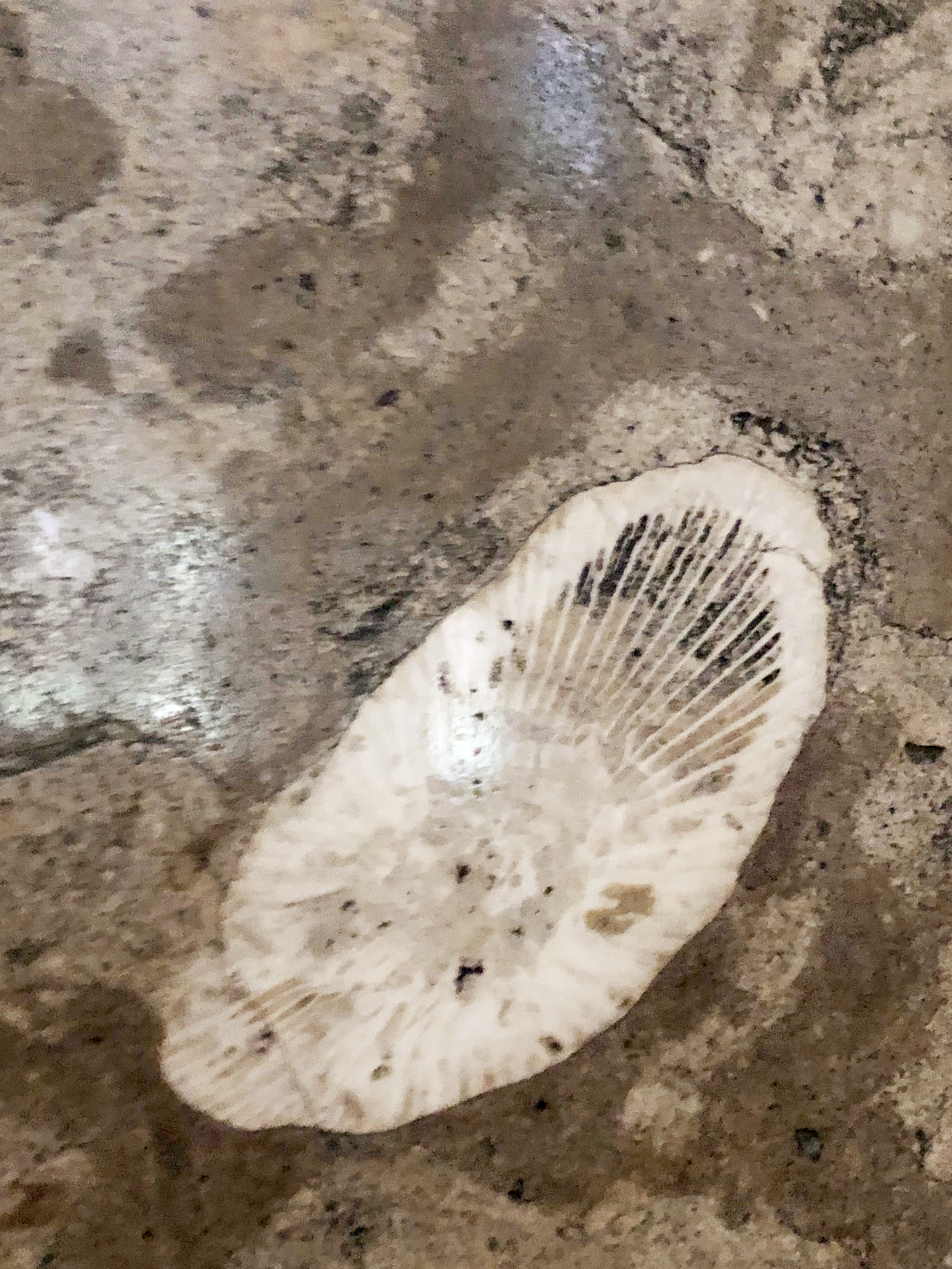 shell-fossil.jpg