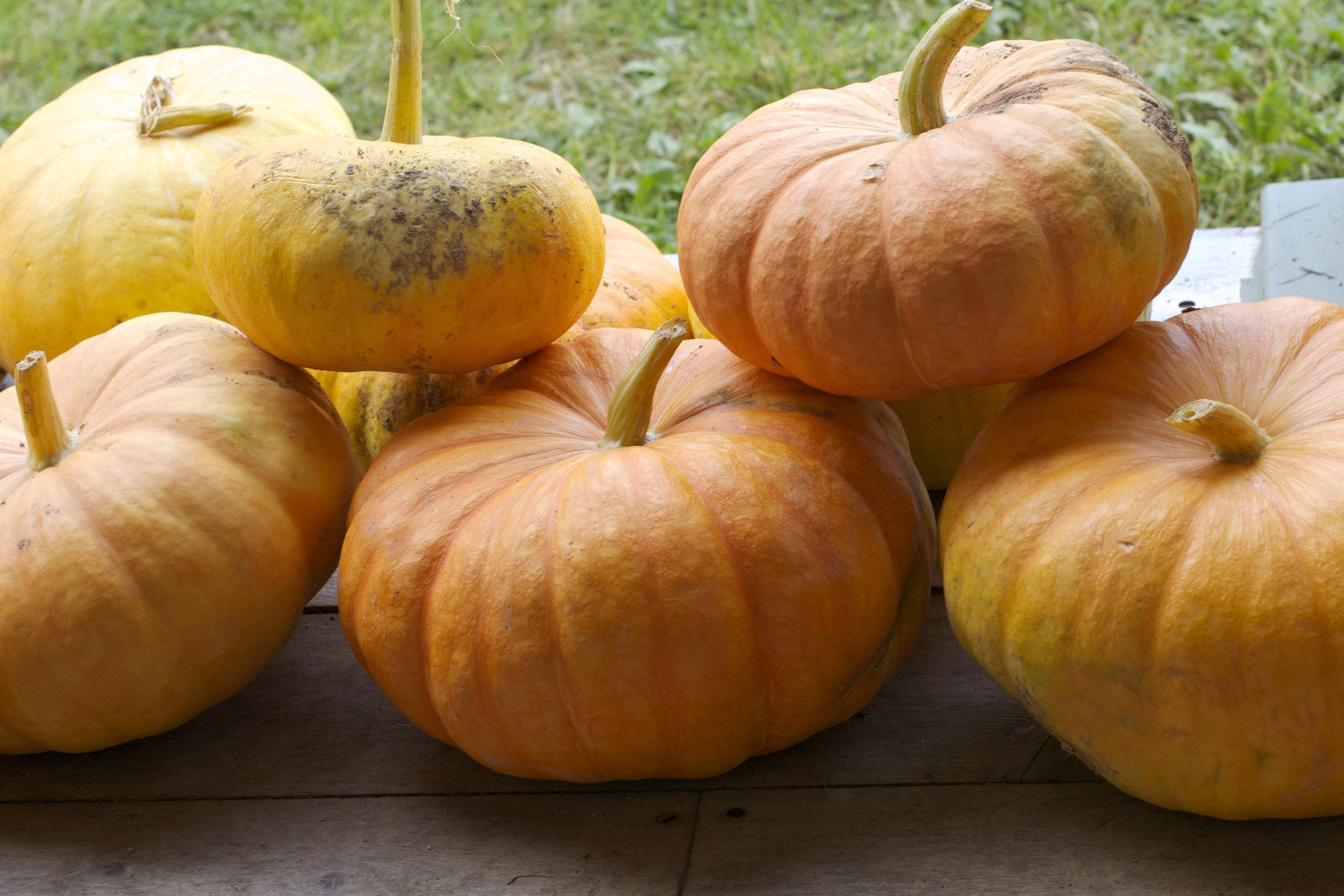 pumpkin-pile.jpg