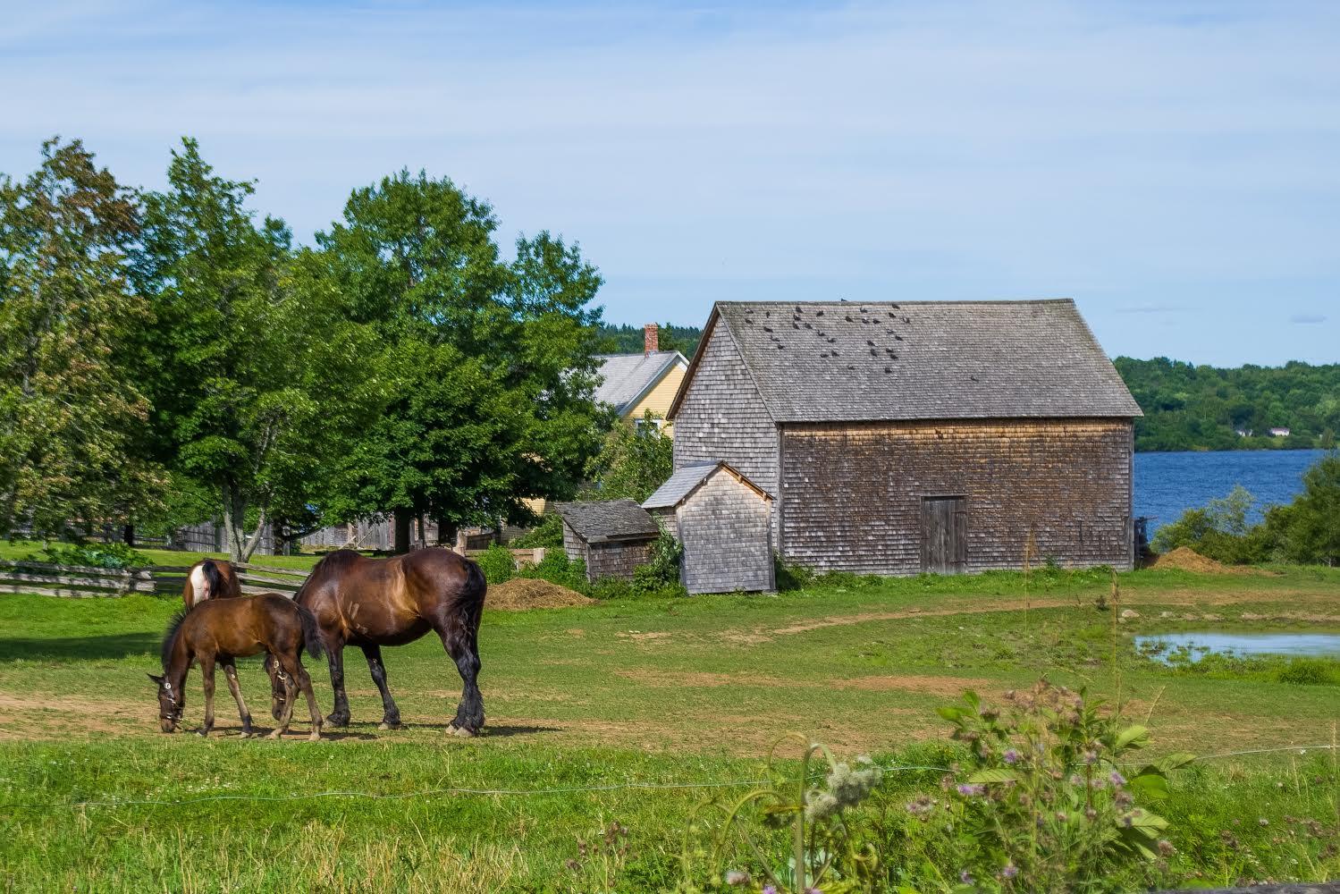 horses-in-field2.jpg