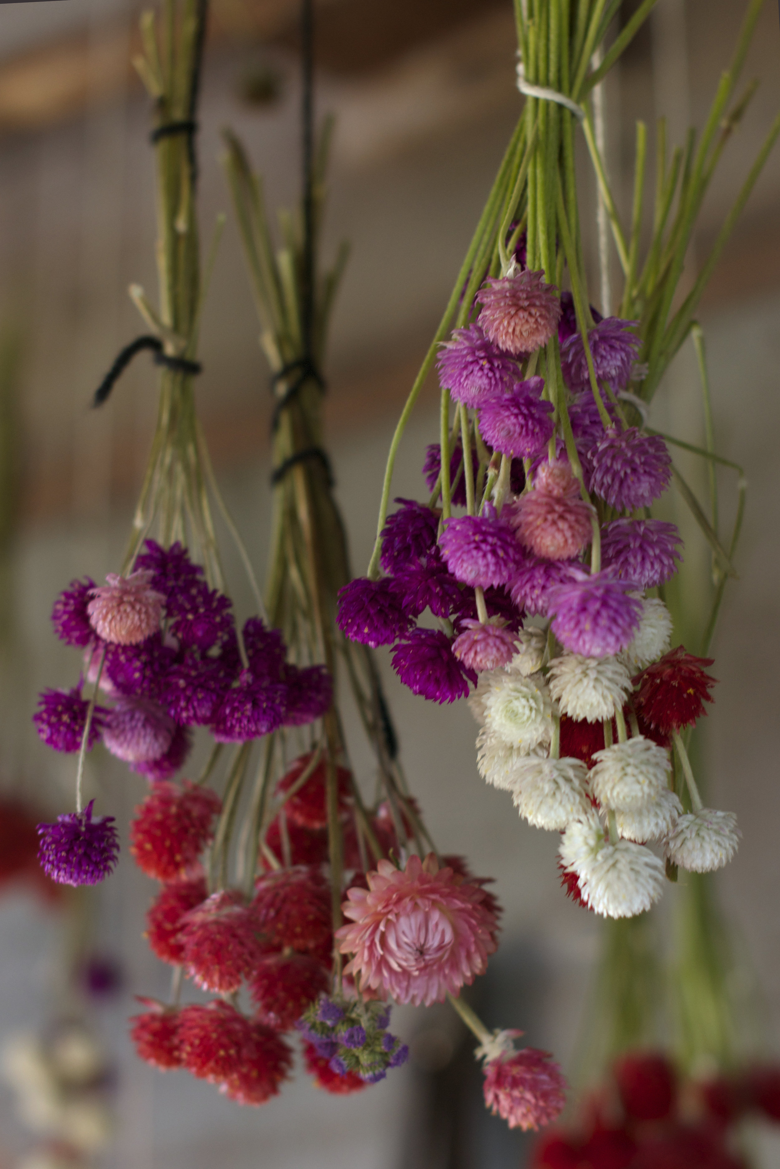 dried-flowers.jpg