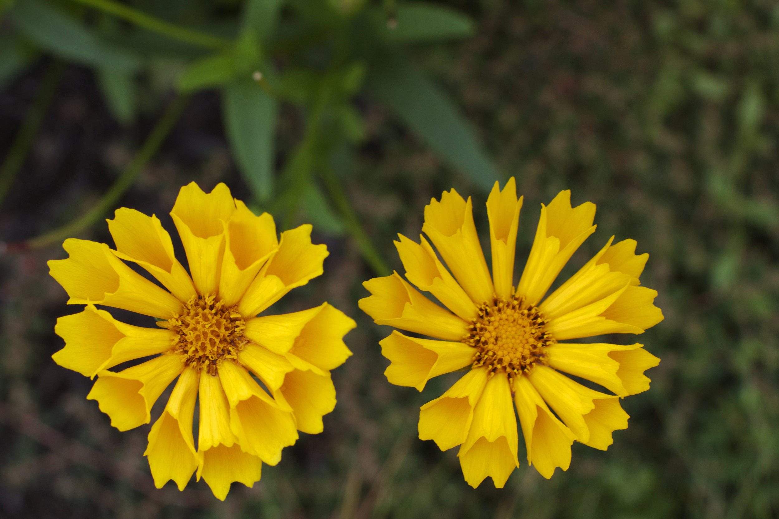 2-yellow-flowers.jpg