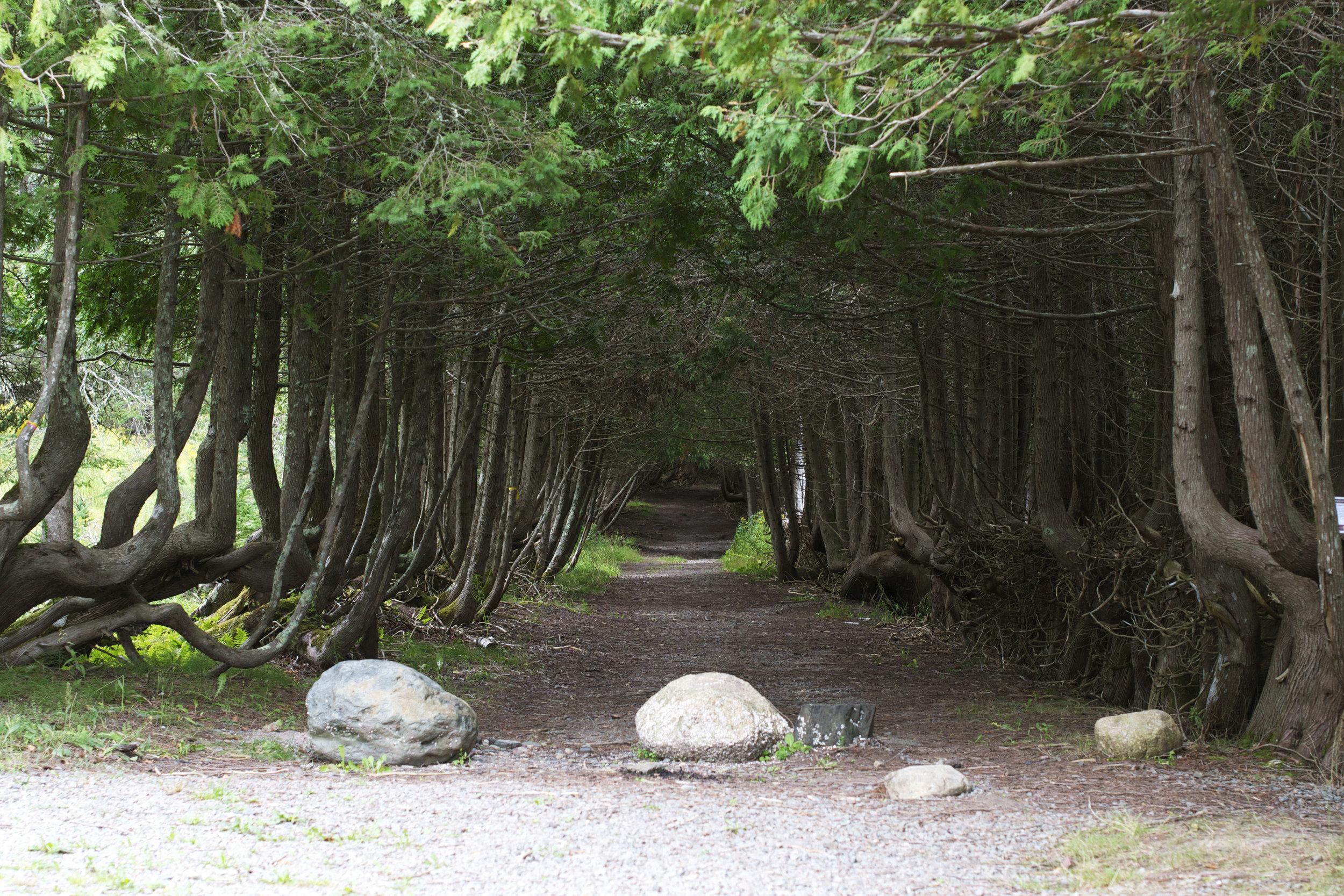 deer-run-through-trees.jpg