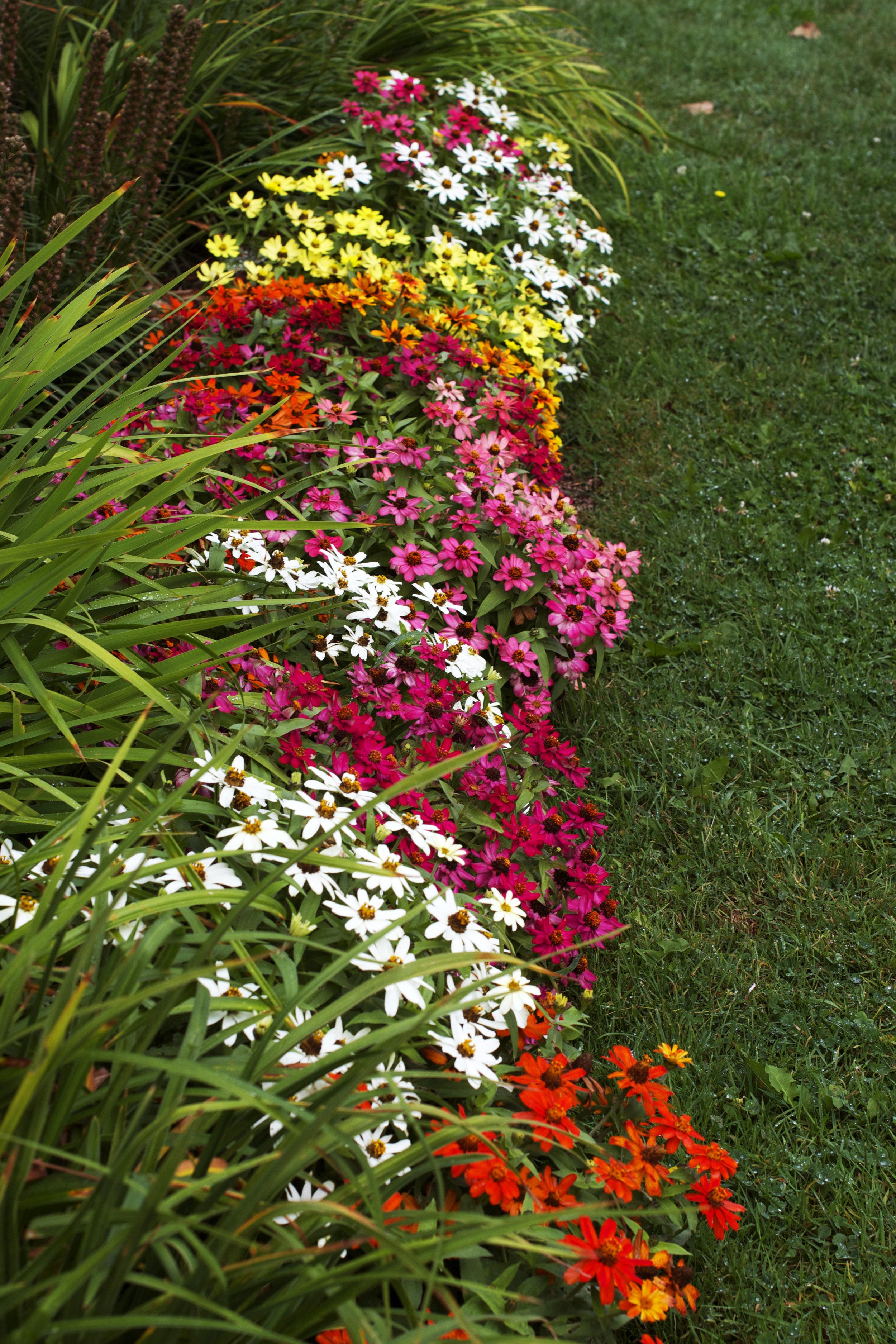 colourful-flower-bed.jpg