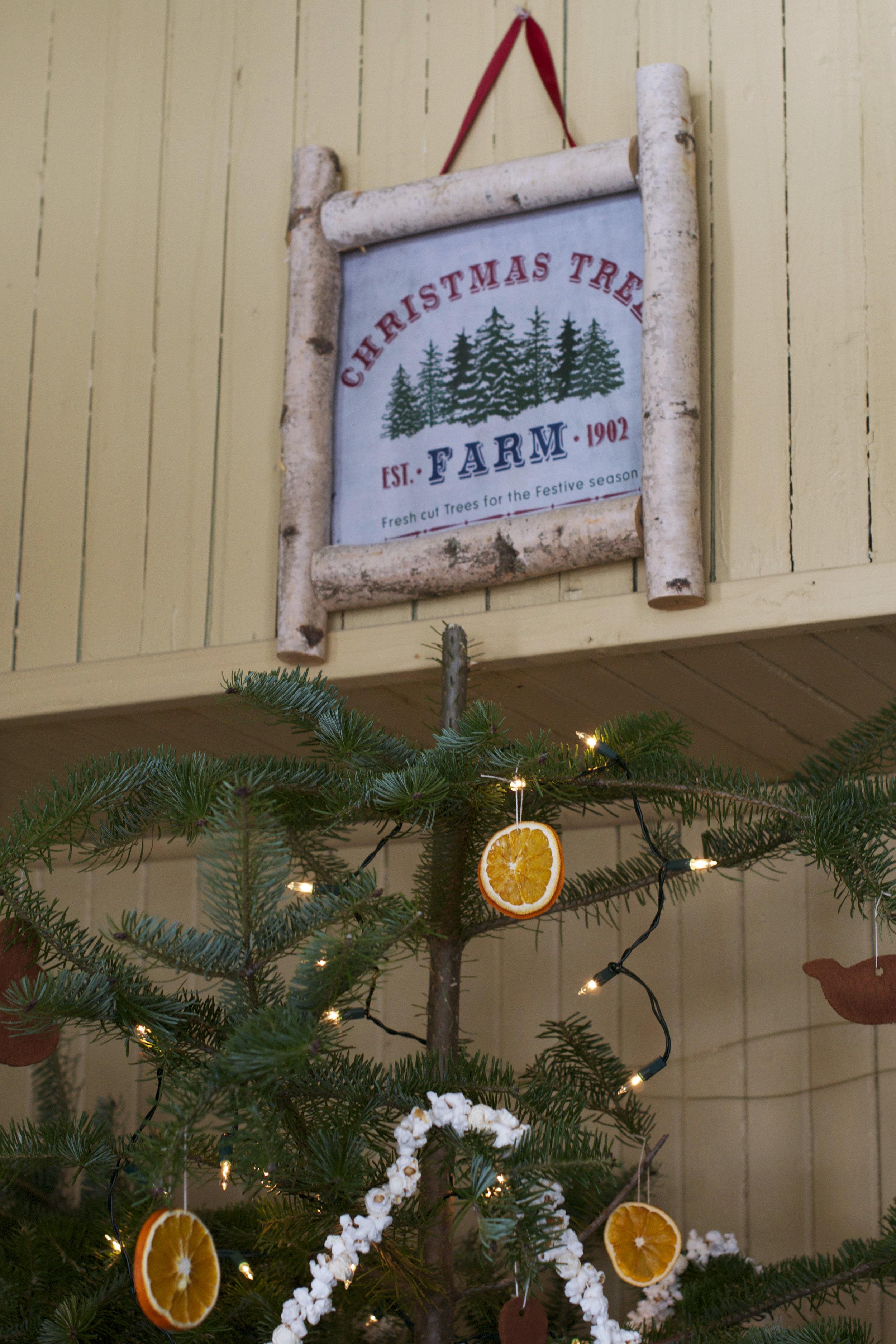 christmas-tree-farm-sign-and-tree.jpg