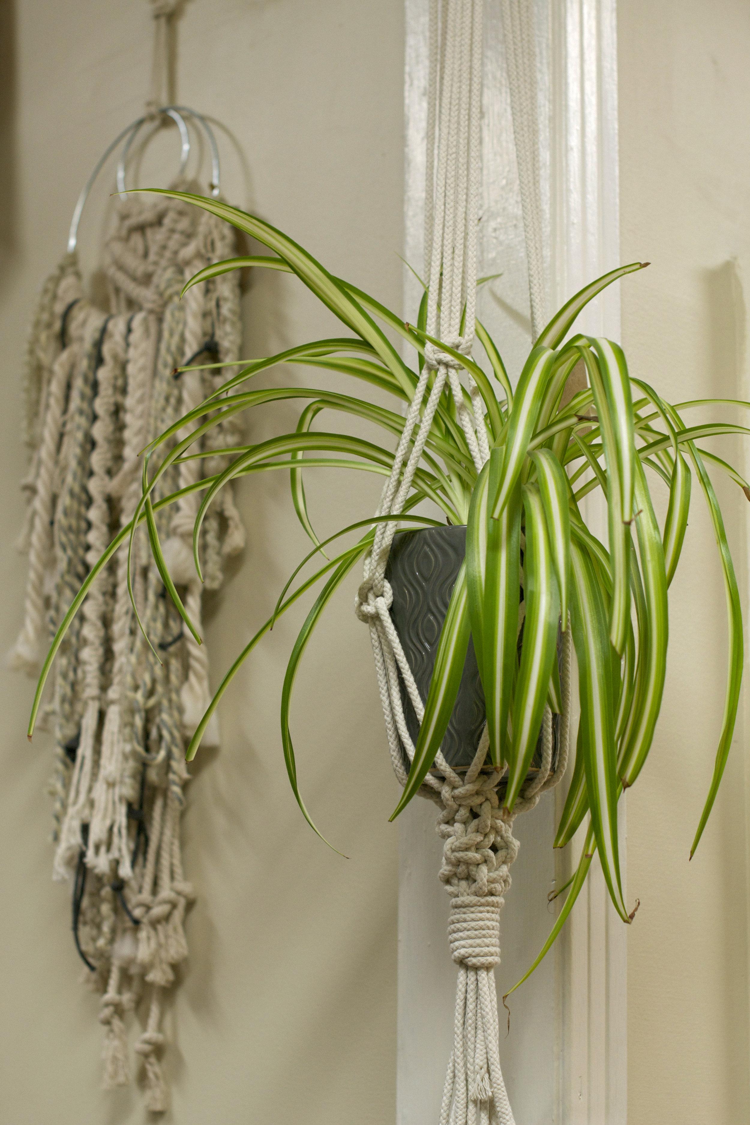 macrame-hanger-spider-plant.jpg