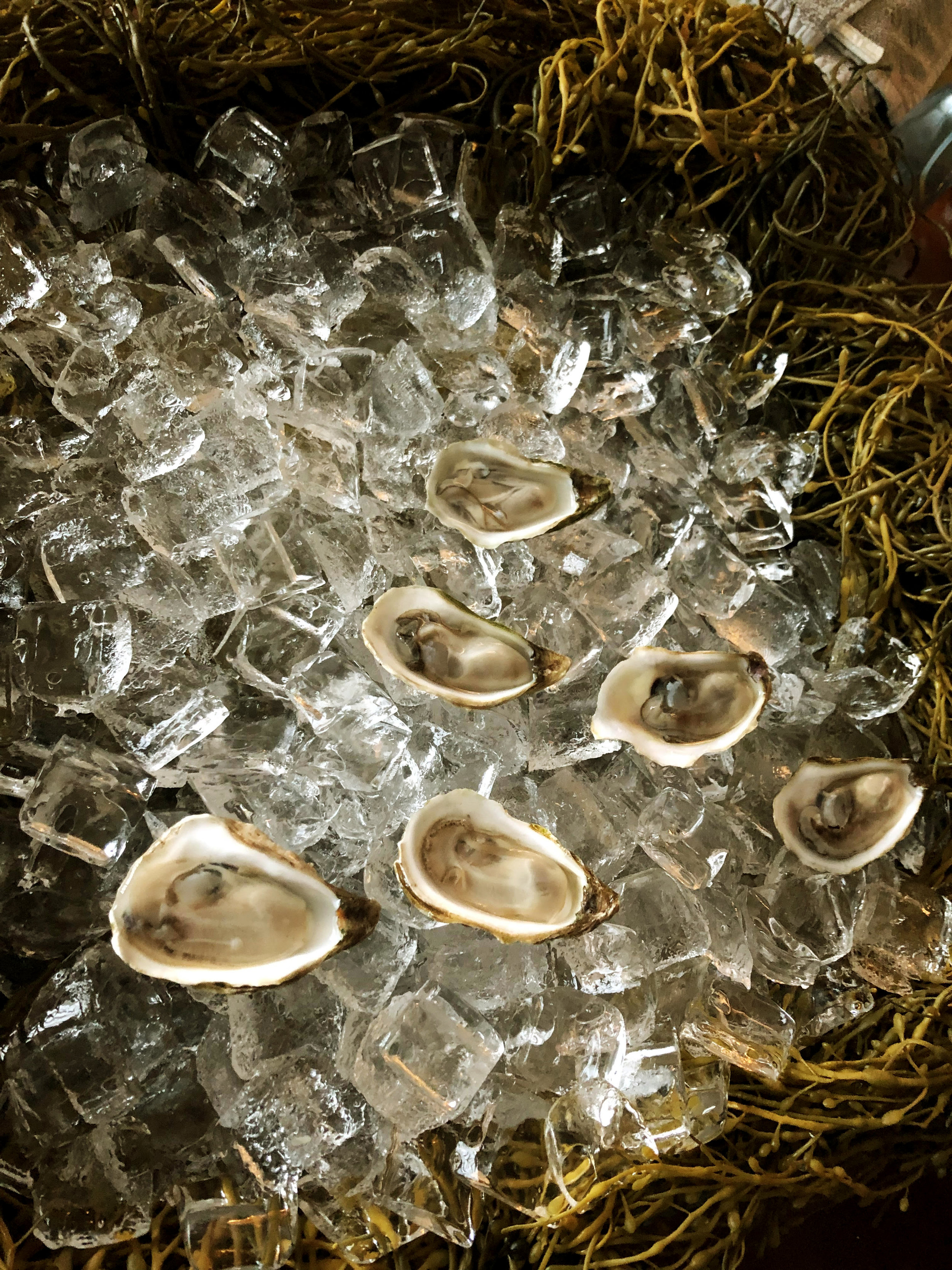mussels-on-ice-and-seaweed-iphone.jpg
