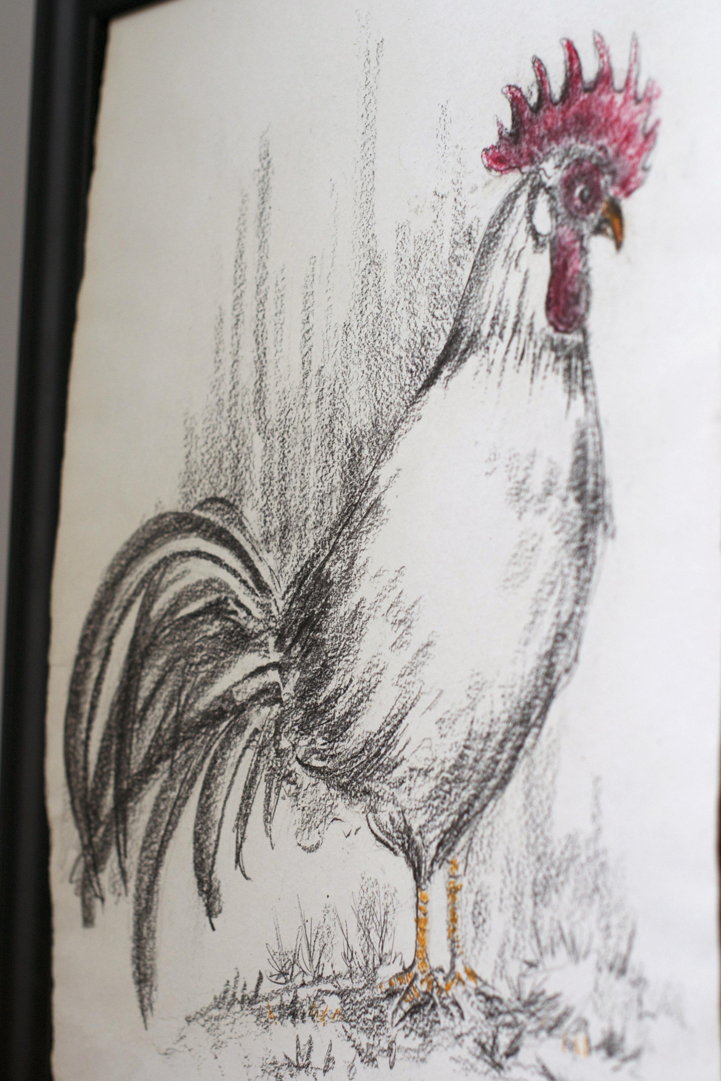 rooster-sketch.jpg