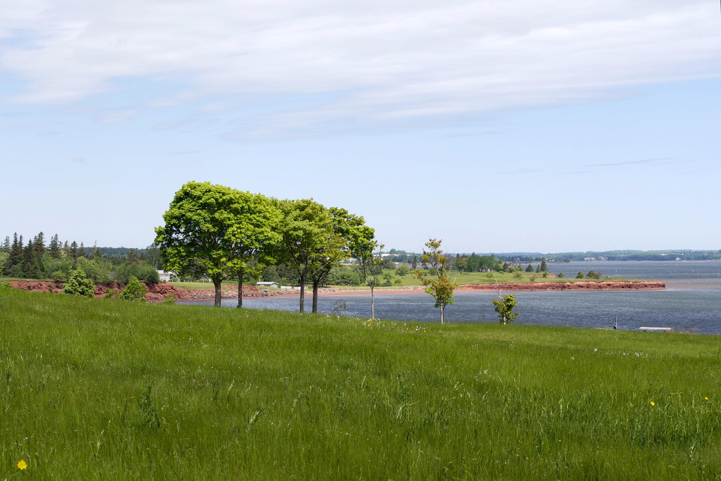 shoreline-walk.jpg